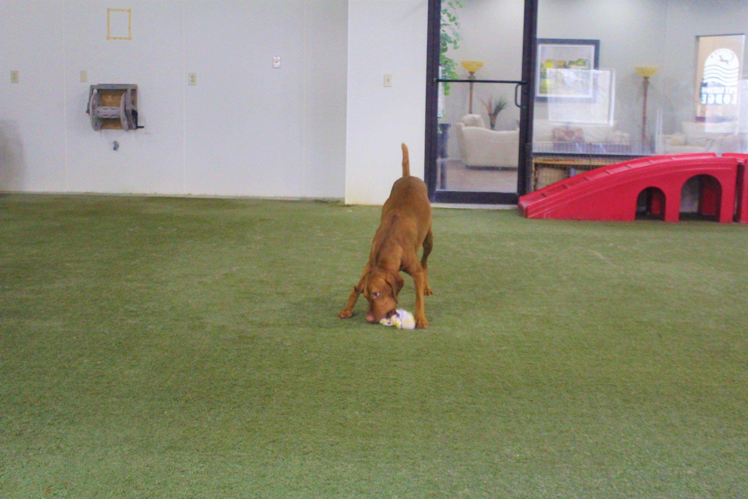 Pet Nation Lodge Daycare Dog Kash 6
