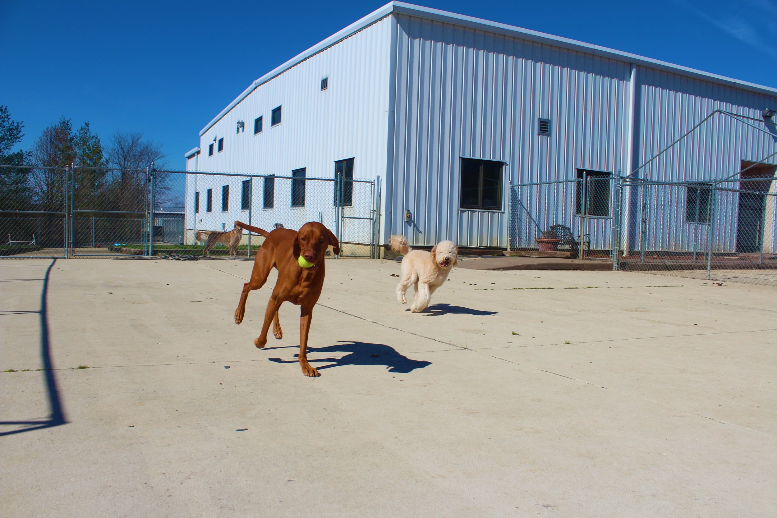Pet Nation Lodge Boarding Dog Kash 5
