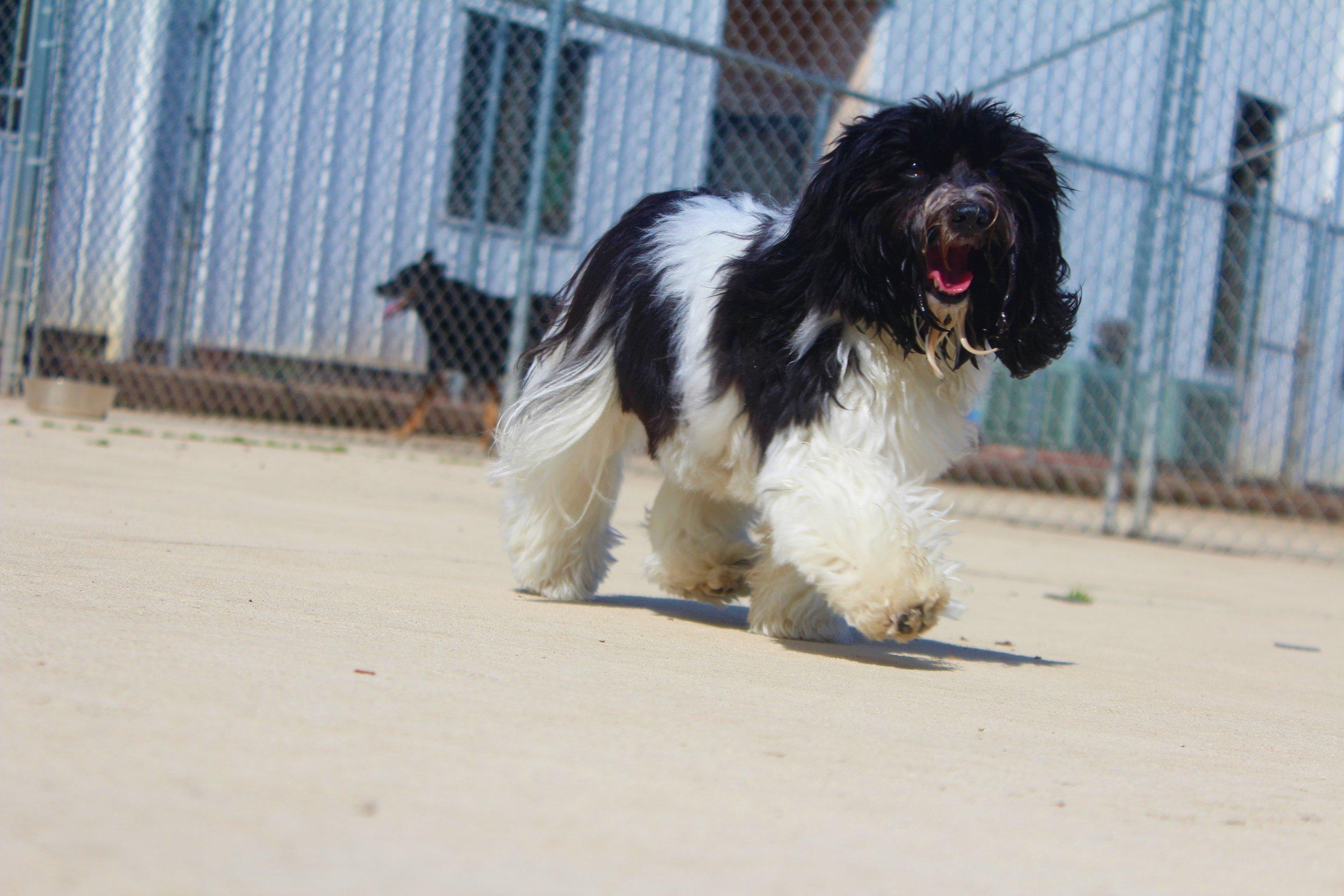Pet Nation Lodge Daycare Dog Abby 3