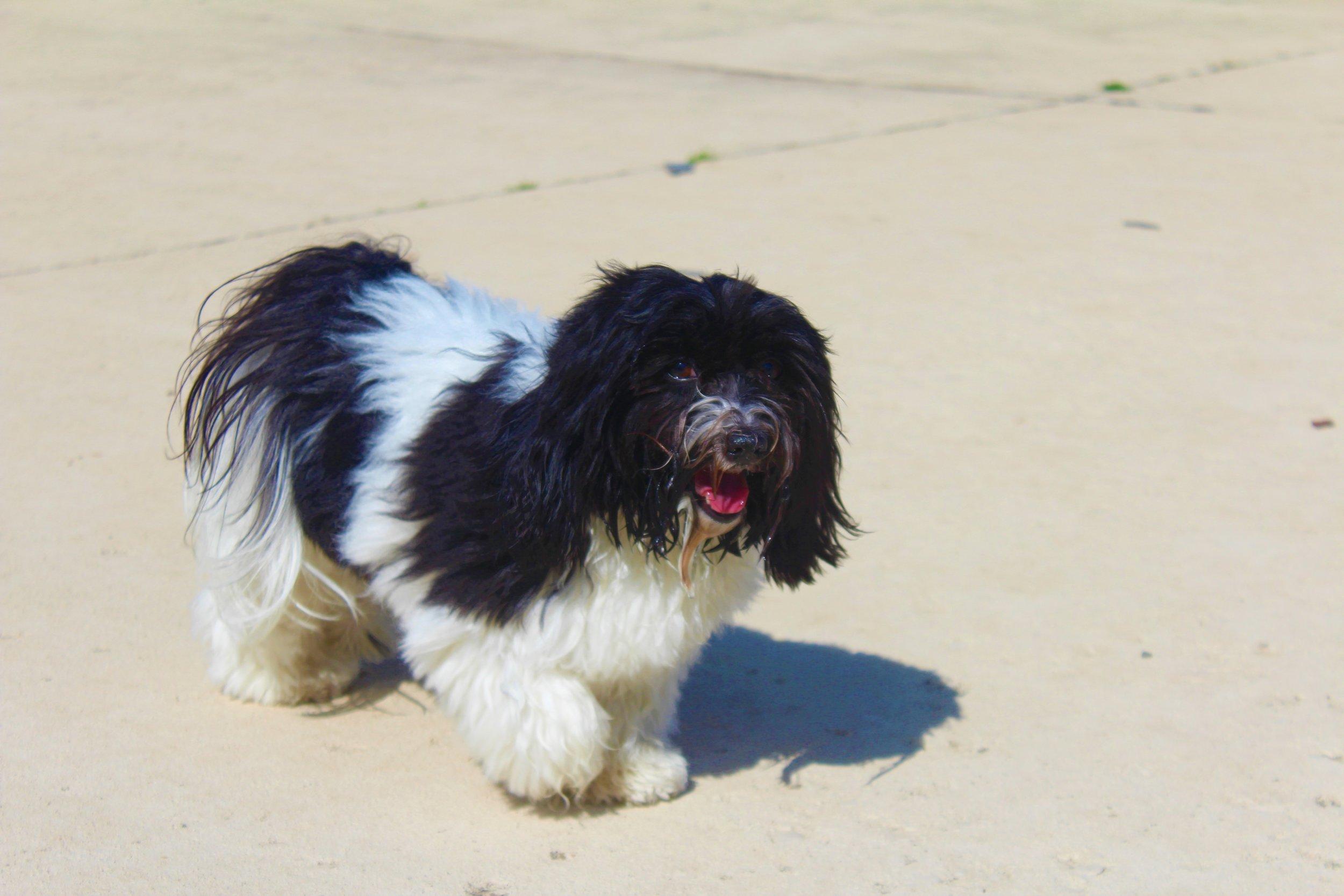 Pet Nation Lodge Boarding Dog Abby 4