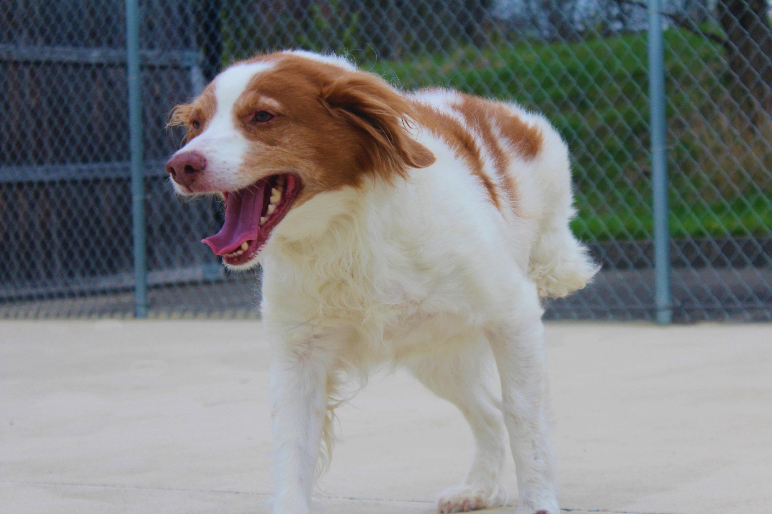 Pet Nation Lodge Boarding Dog Ruby 4
