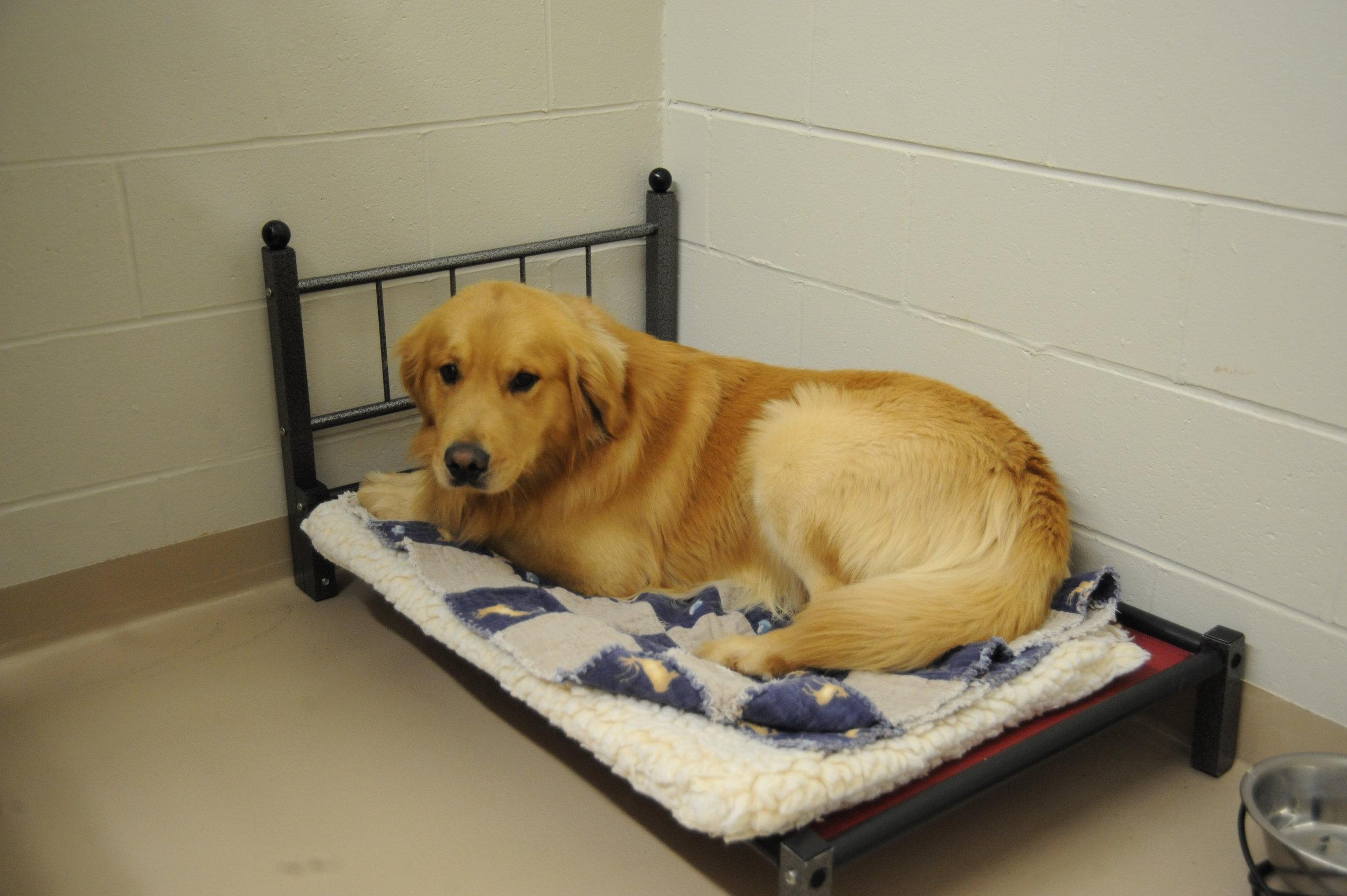 Pet Nation Lodge Dog Boarding Room