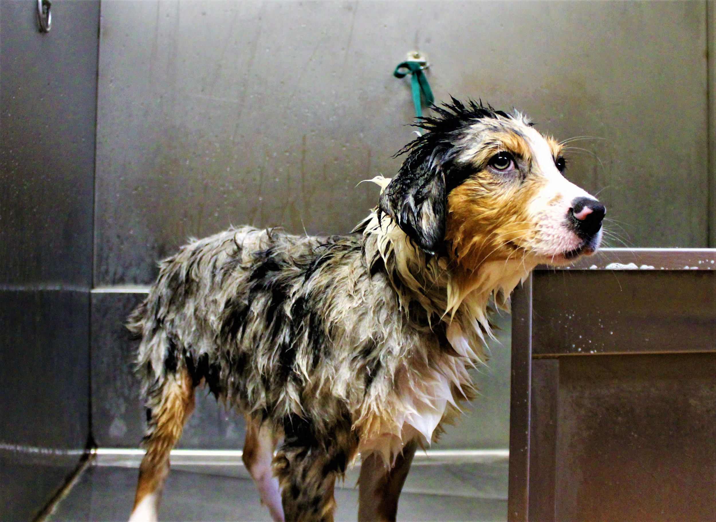Pet Nation Lodge Grooming Dog Flash 6