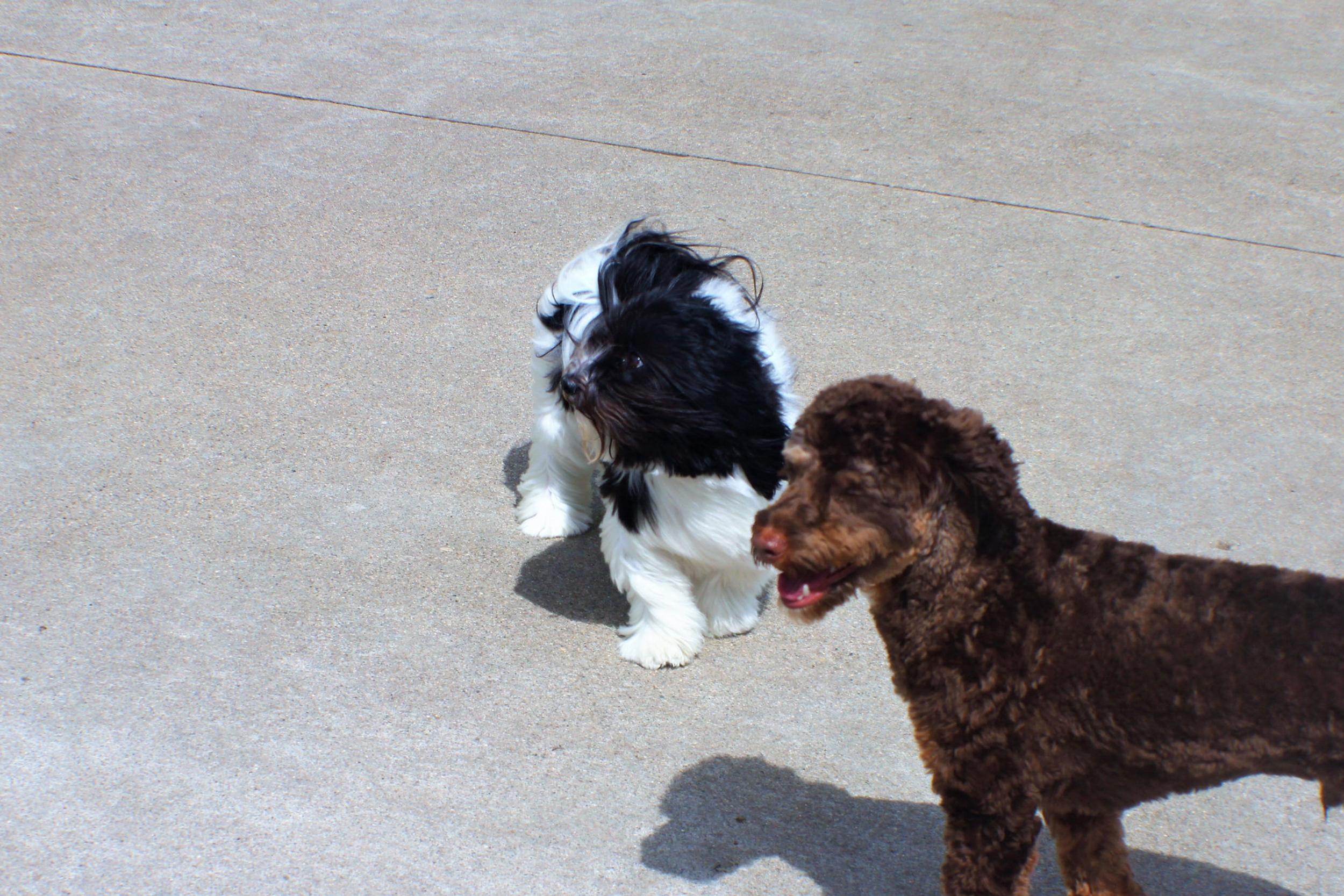 Pet Nation Lodge Daycare Dog Abby 5