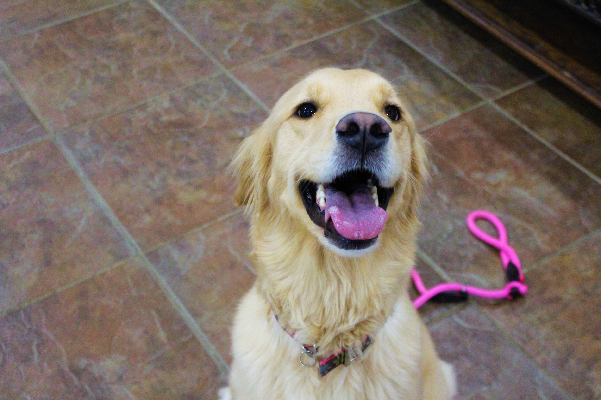 Pet Nation Lodge Daycare Dog Rosie 1