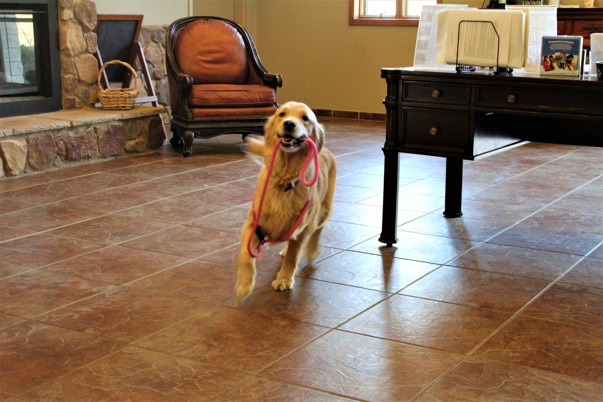 Pet Nation Lodge Boarding Dog Rosie 2