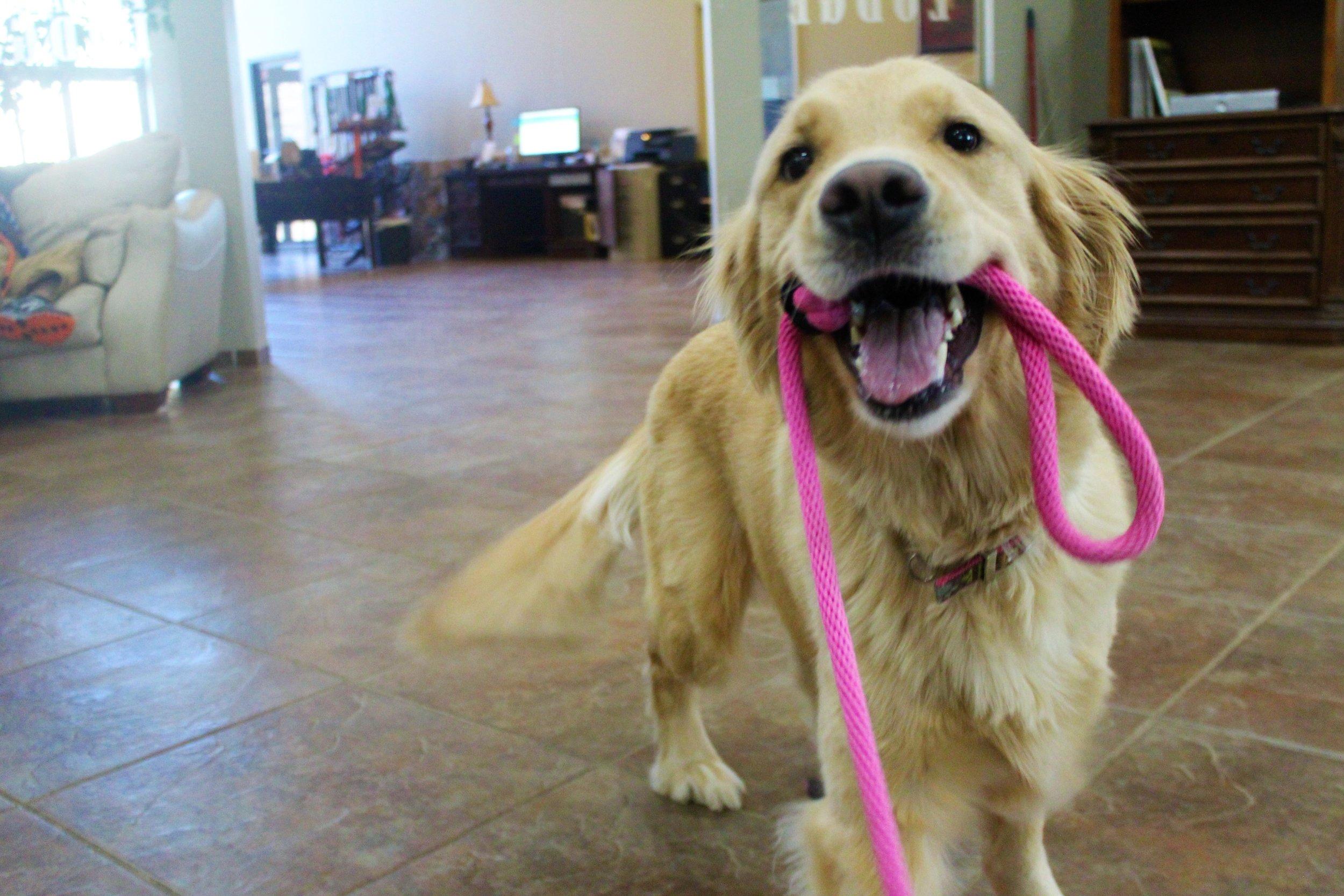Pet Nation Lodge Grooming Dog Rosie 5