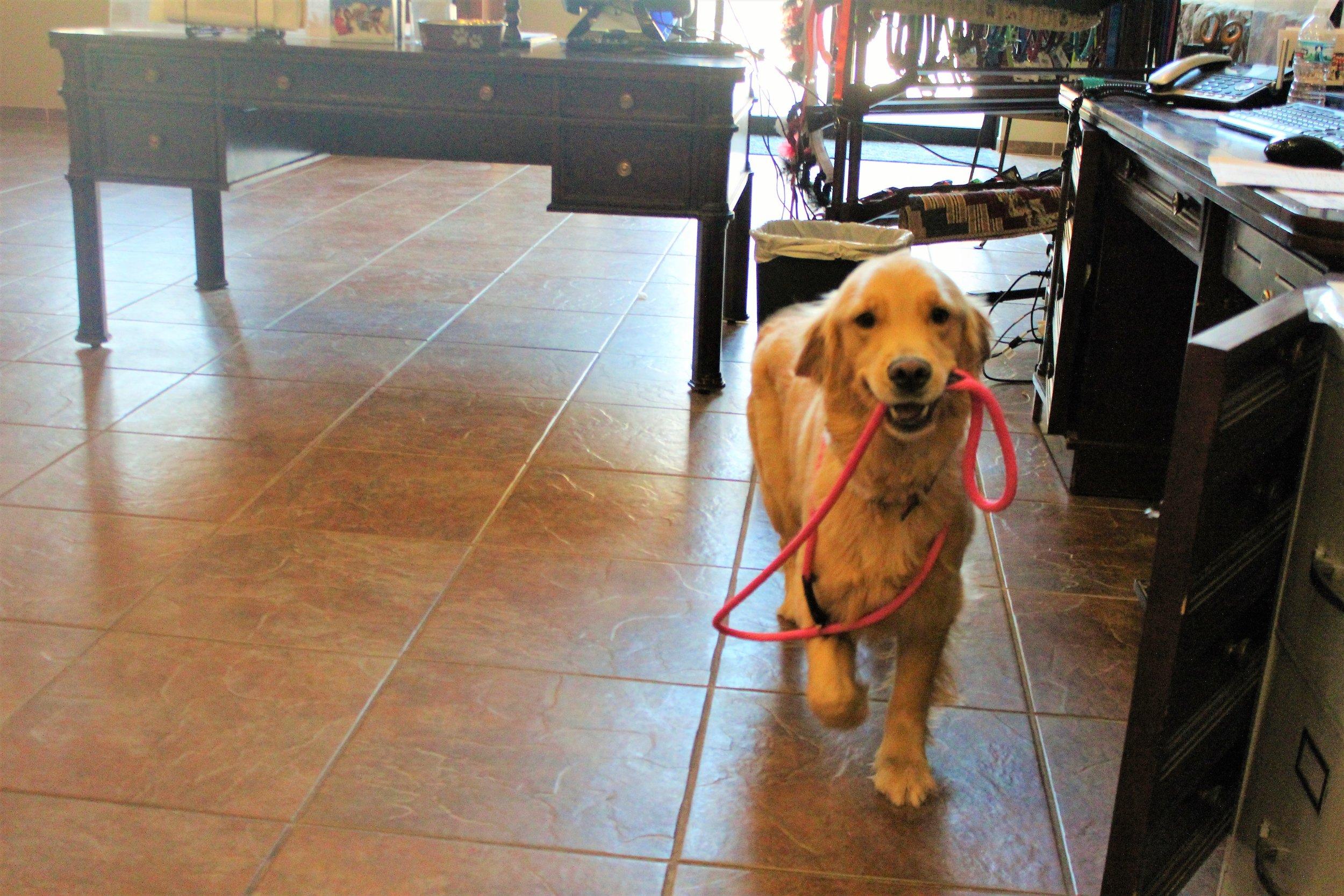 Pet Nation Lodge Daycare Dog Rosie 6