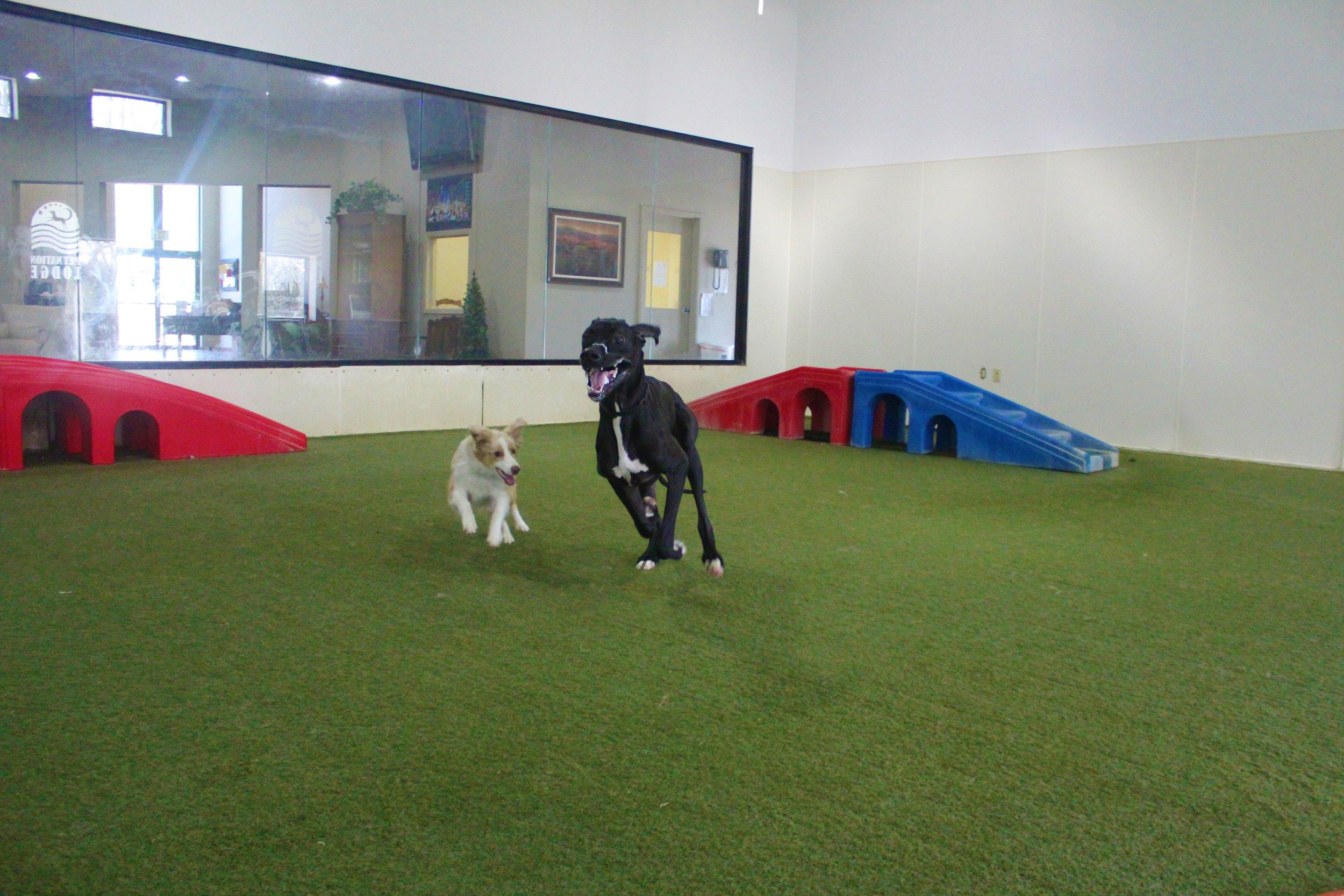 Pet Nation Lodge Boarding Dog Lou 2