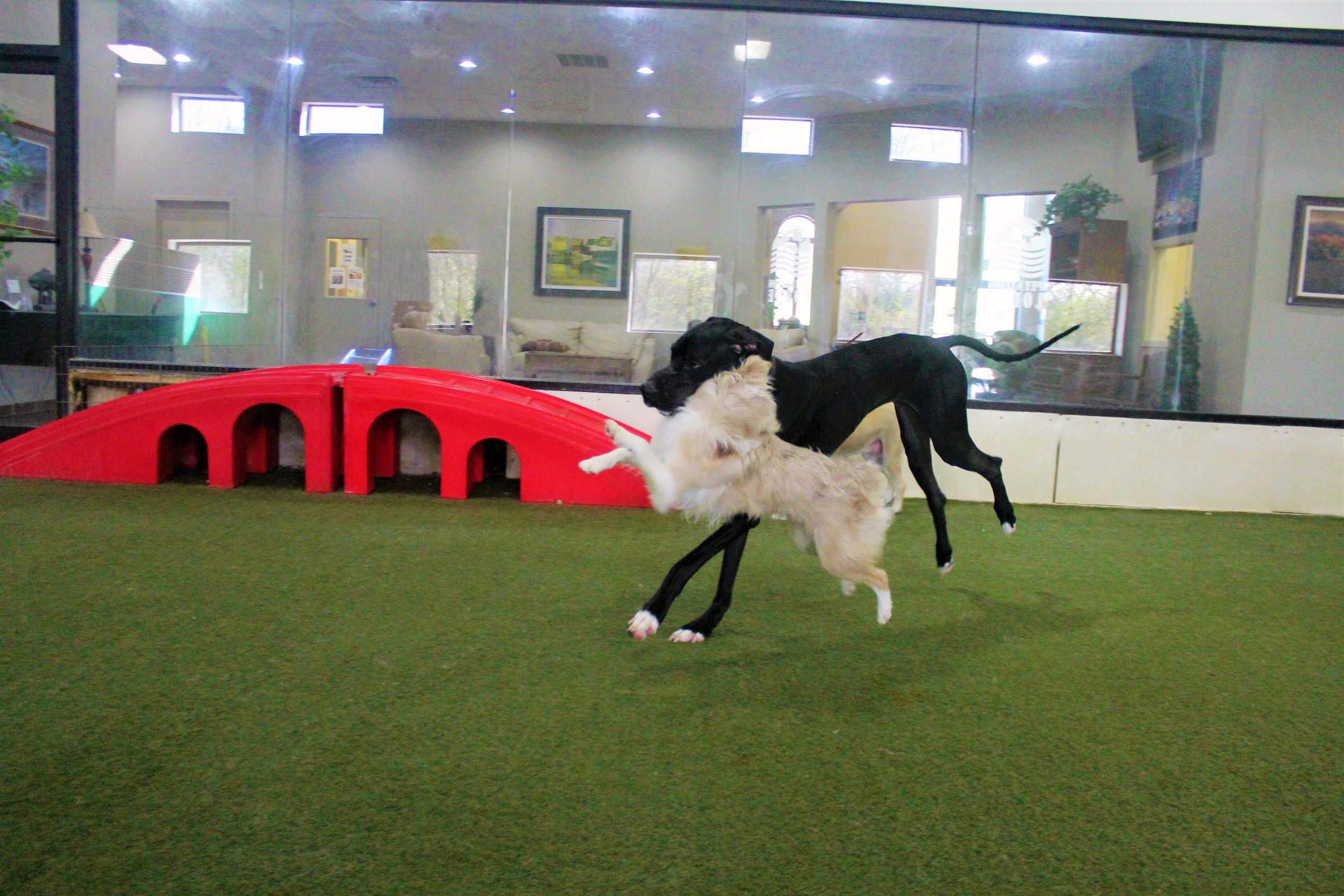 Pet Nation Lodge Daycare Dog Lou 3