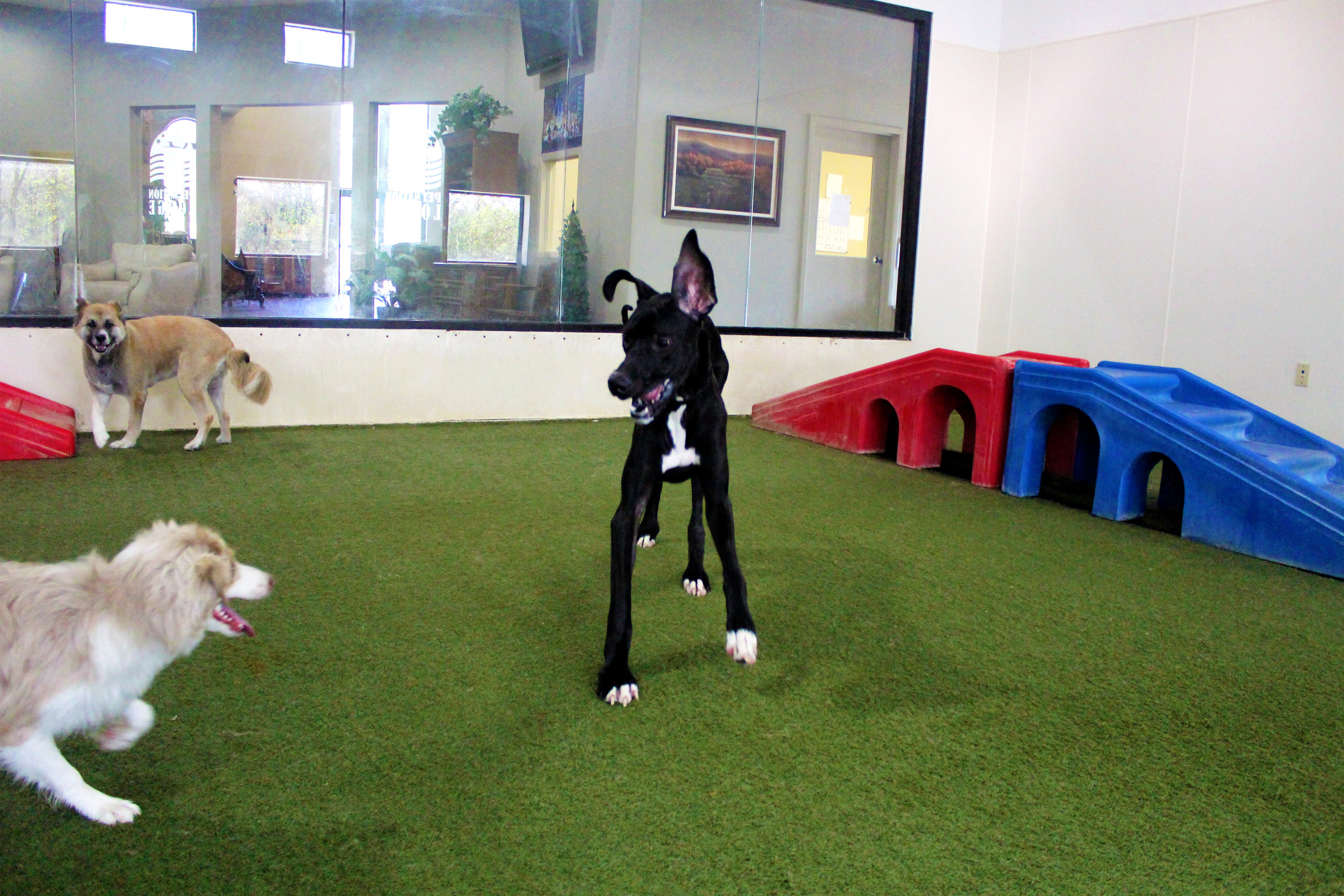 Pet Nation Lodge Daycare Dog Lou 5