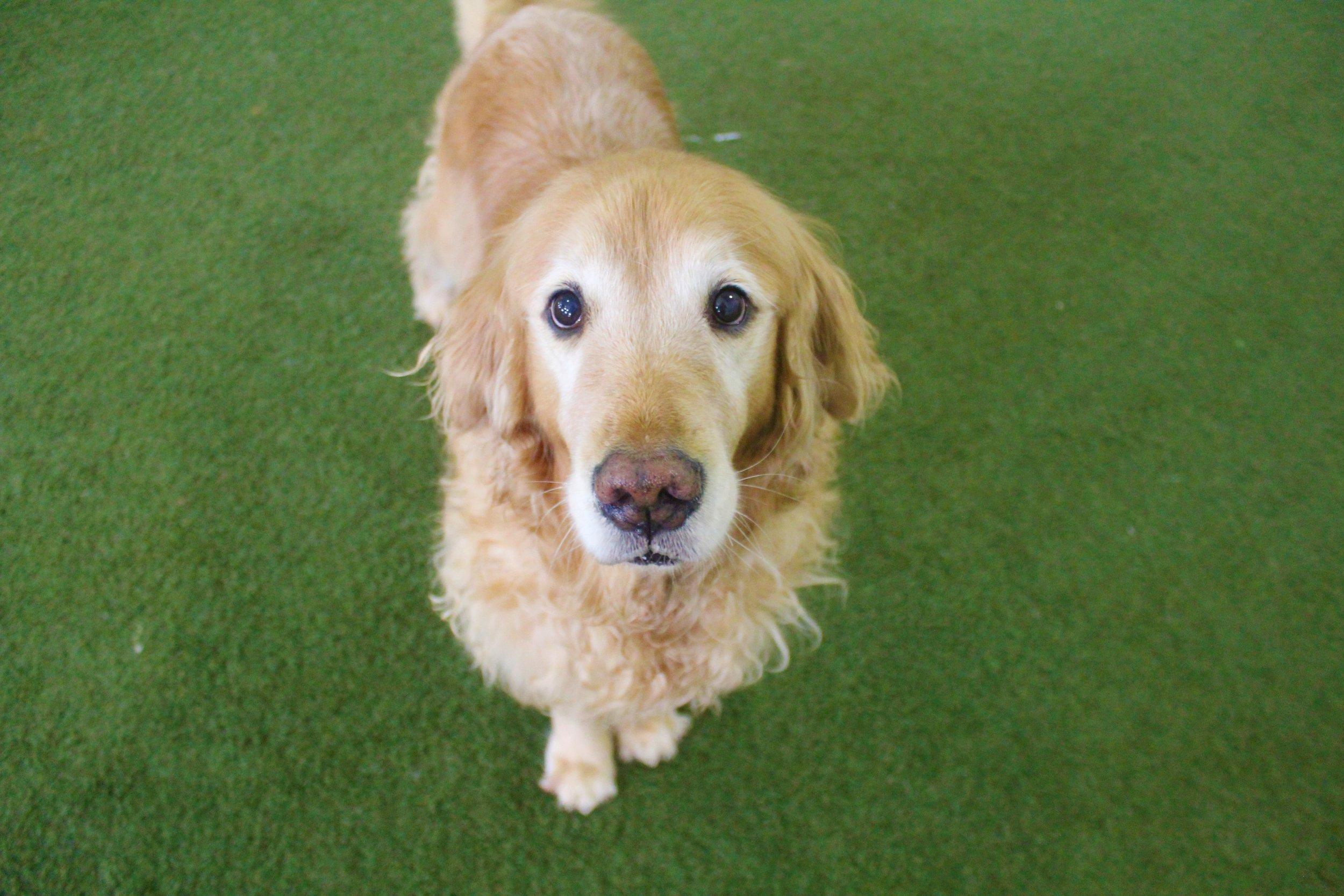 Pet Nation Lodge Daycare Dog Chloe 1