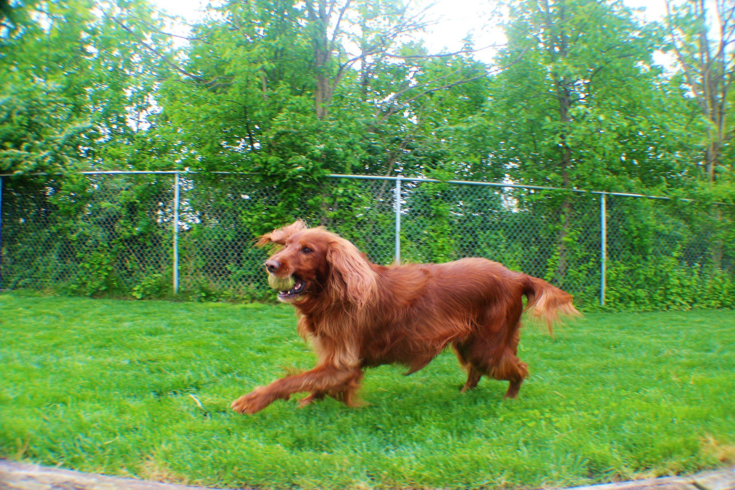 Pet Nation Lodge Daycare Dog Bailee 1