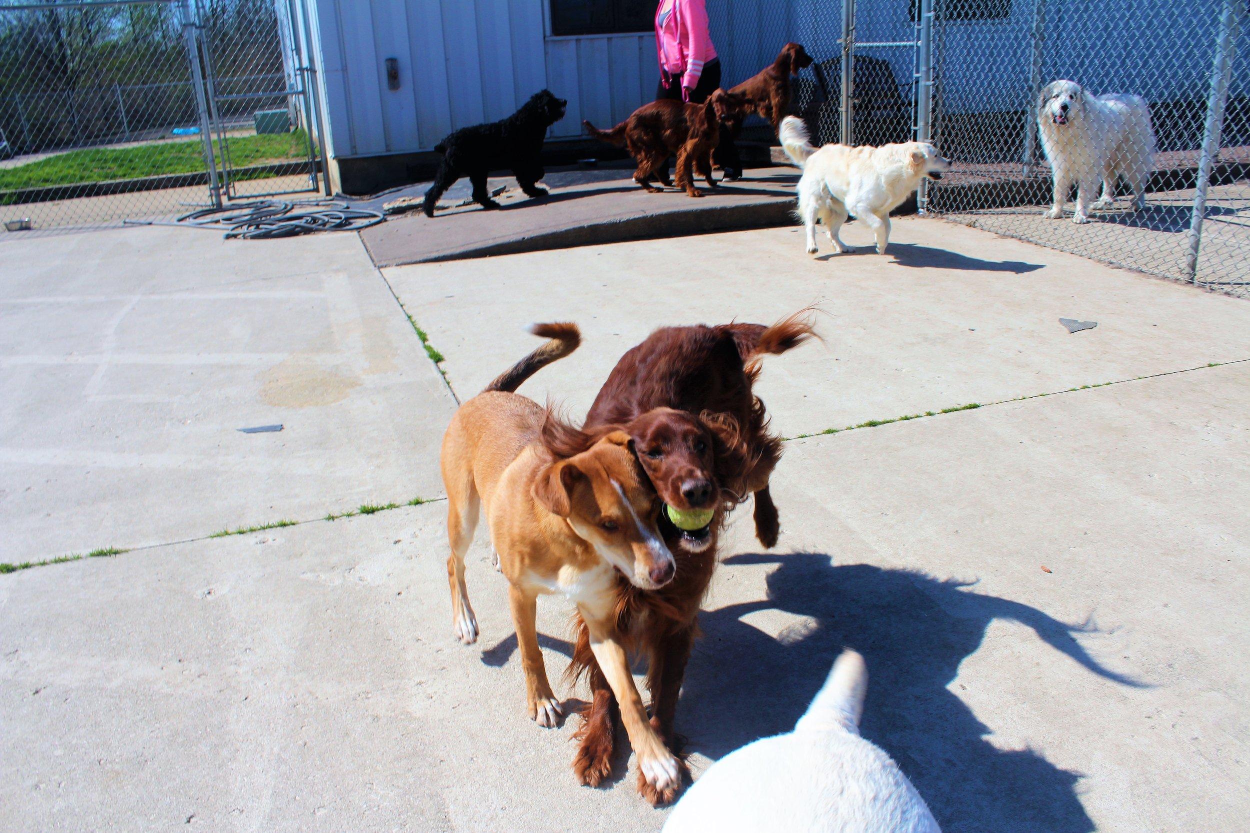 Pet Nation Lodge Daycare Dog Bailee 5
