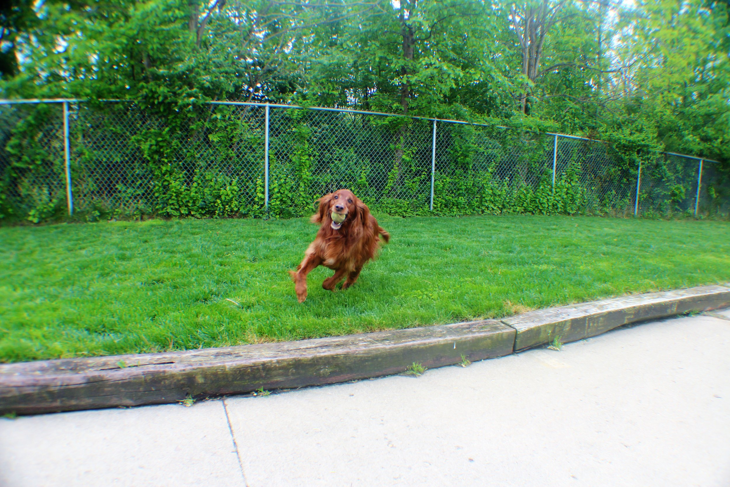 Pet Nation Lodge Boarding Dog Bailee 6
