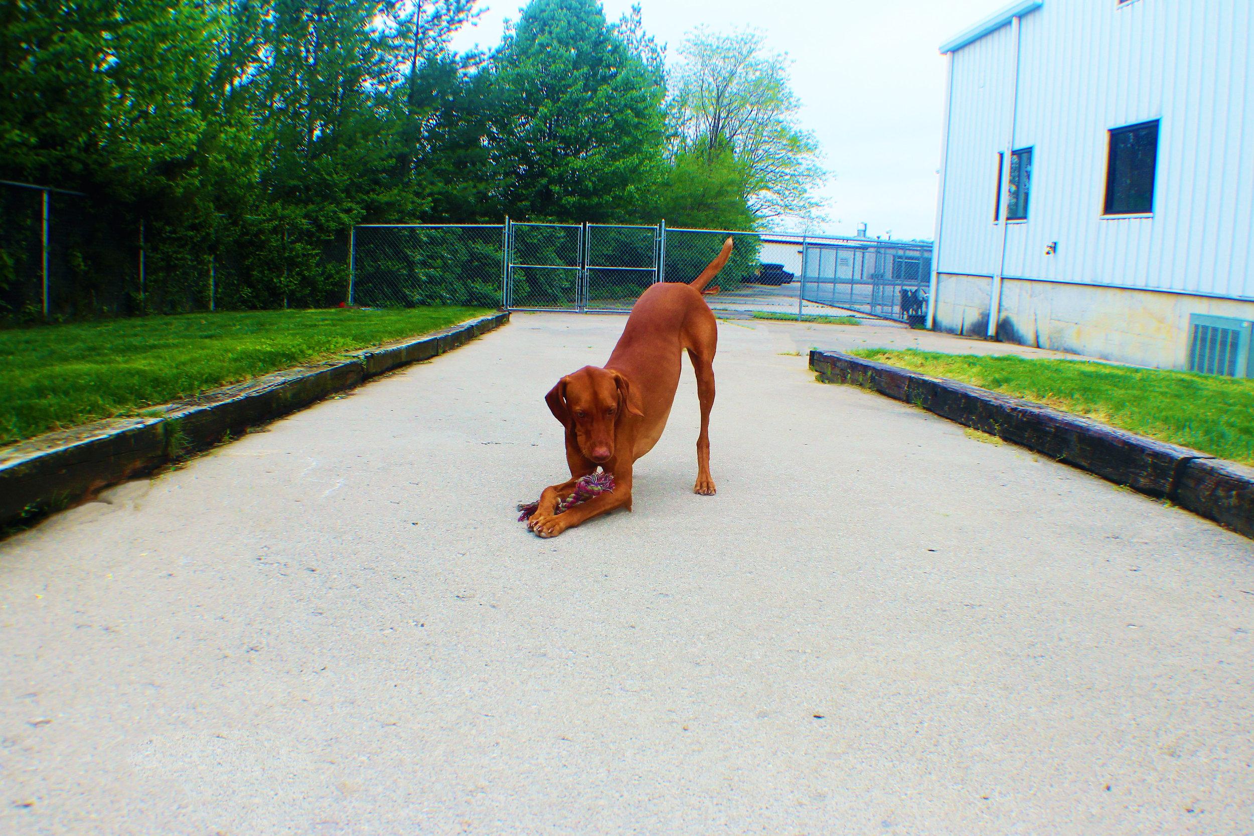 Pet Nation Lodge Daycare Dog 7