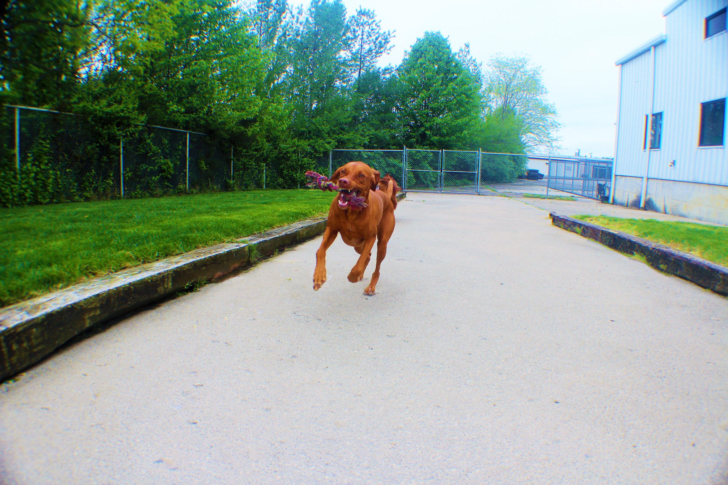 Pet Nation Lodge Daycare Dog Kash 9