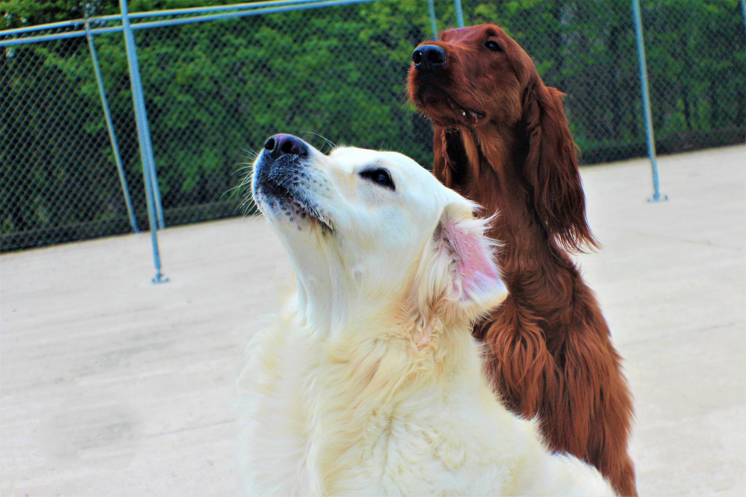 Pet Nation Lodge Boarding Dog Bianca 1