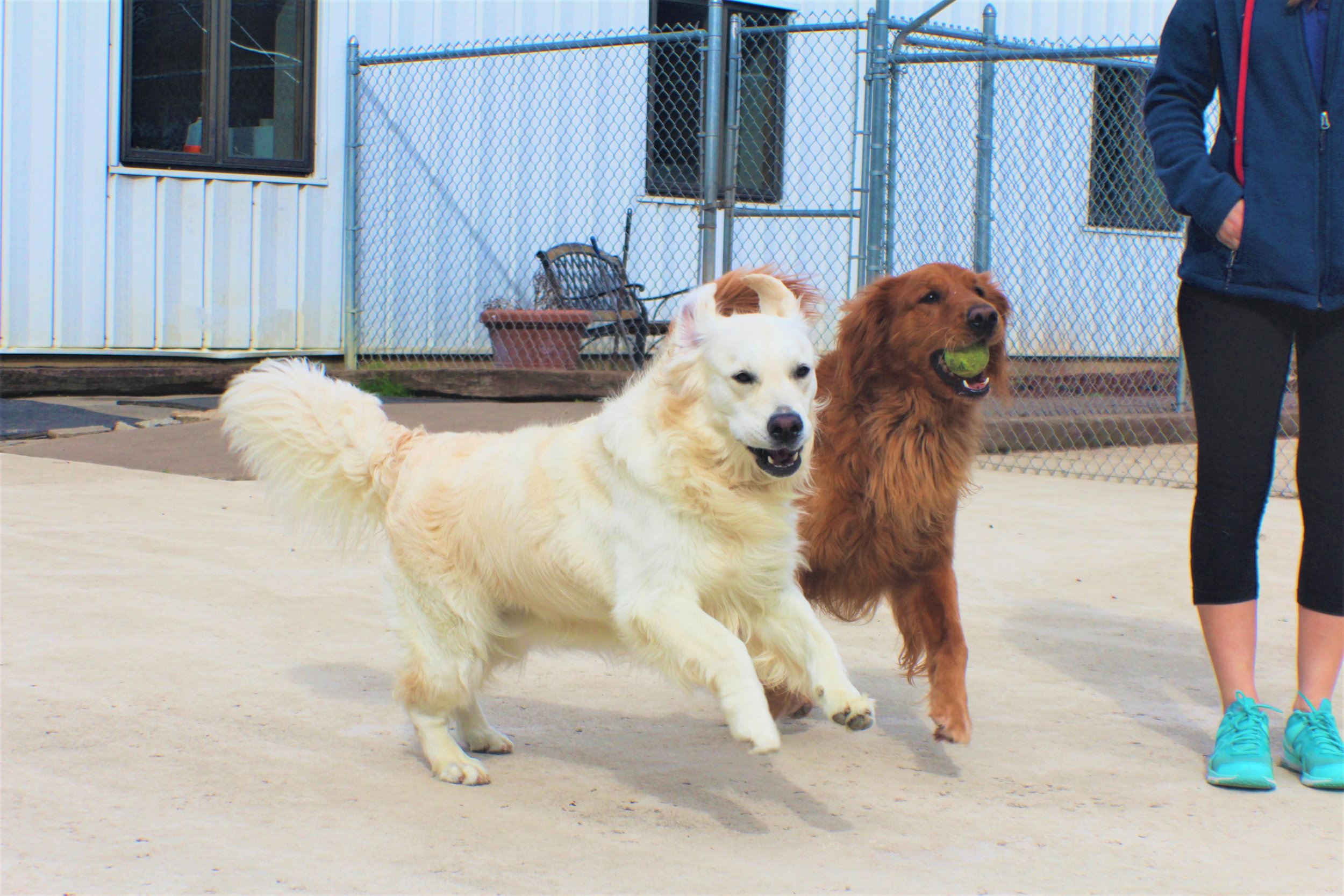 Pet Nation Lodge Daycare Dog Bianca 3