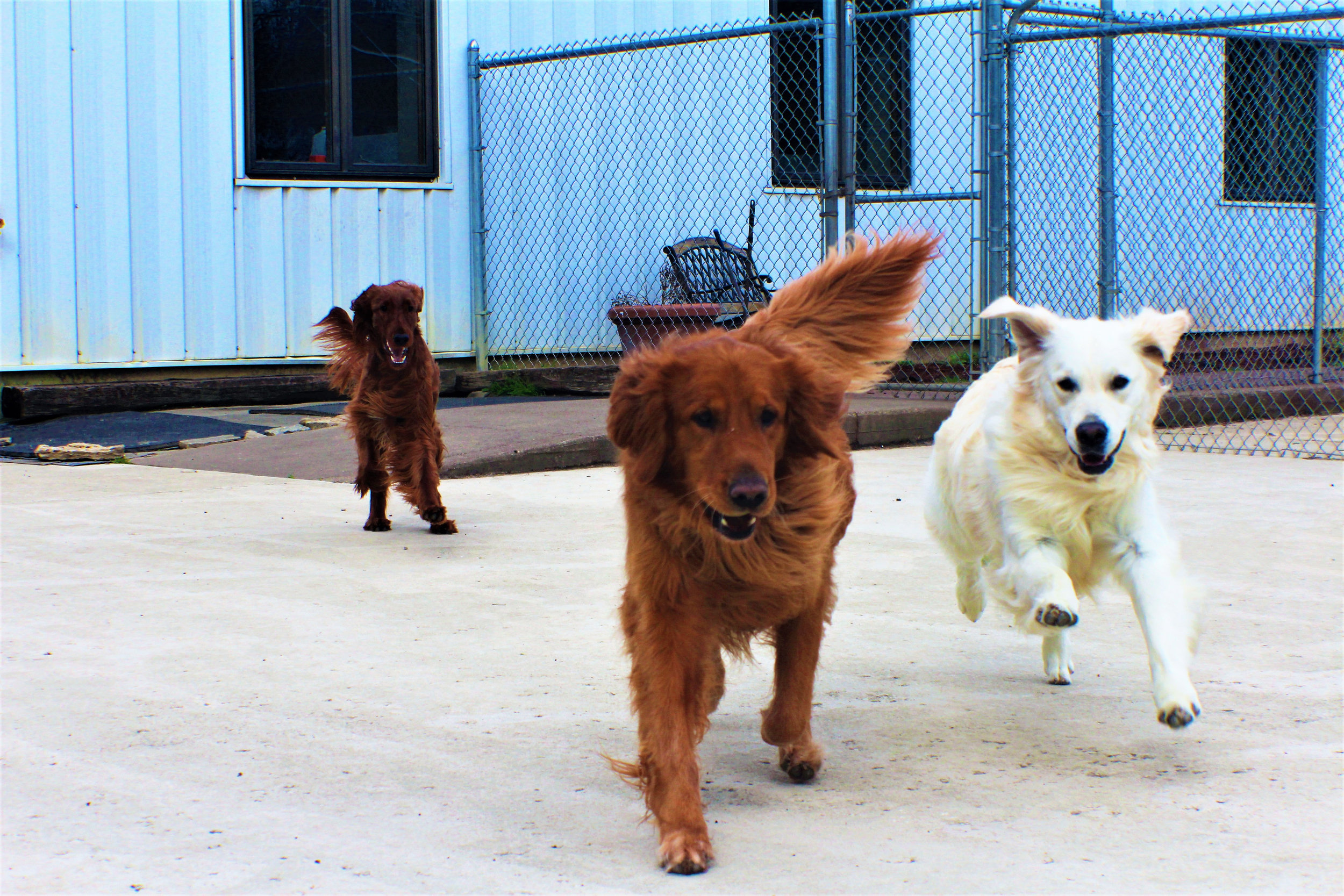 Pet Nation Lodge Boarding Dog Bianca 4