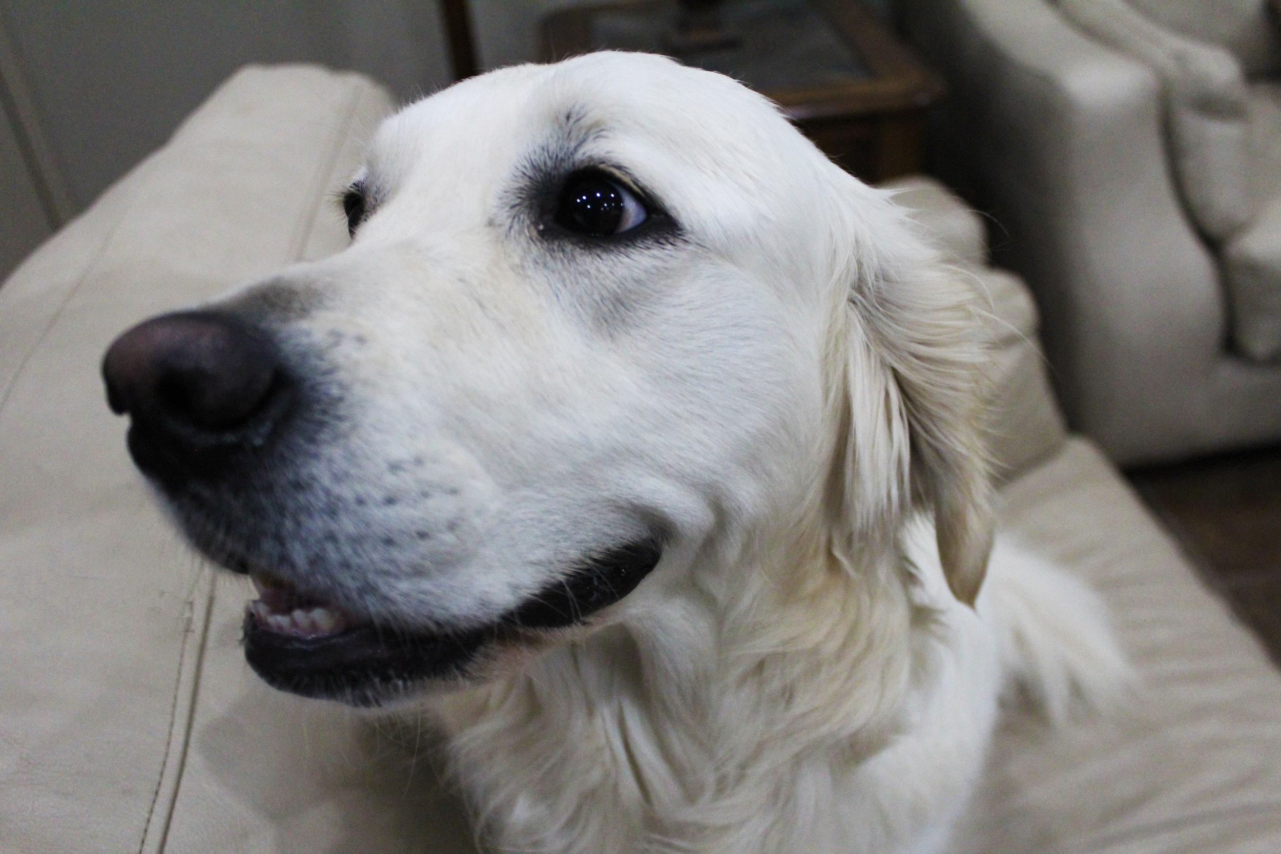 Pet Nation Lodge Daycare Dog Bianca 5