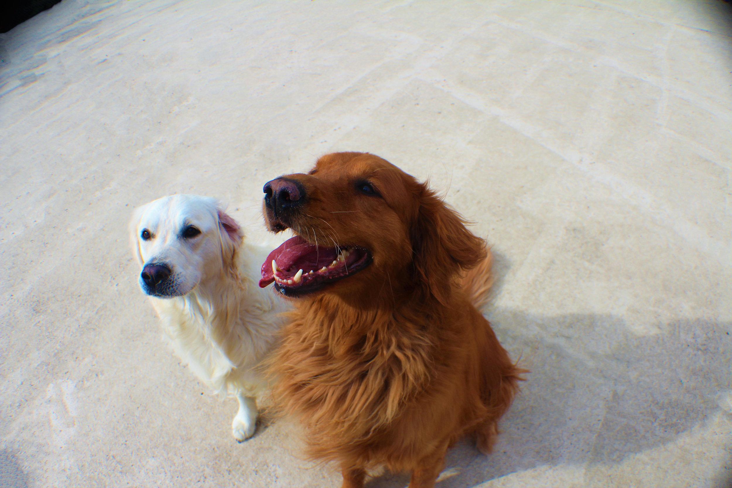 Pet Nation Lodge Boarding Dog Bianca 6