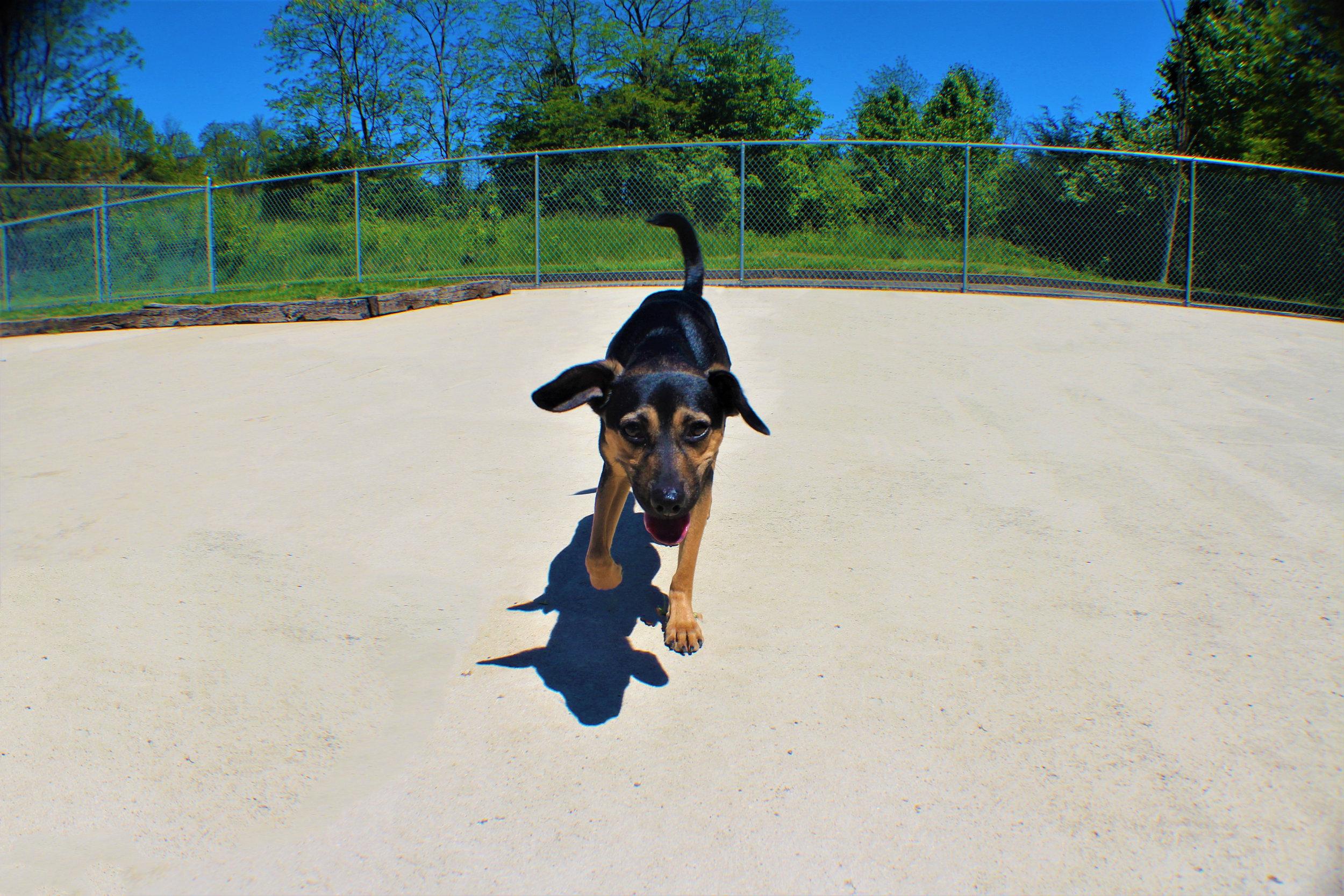 Pet Nation Lodge Daycare Dog Elwood 1