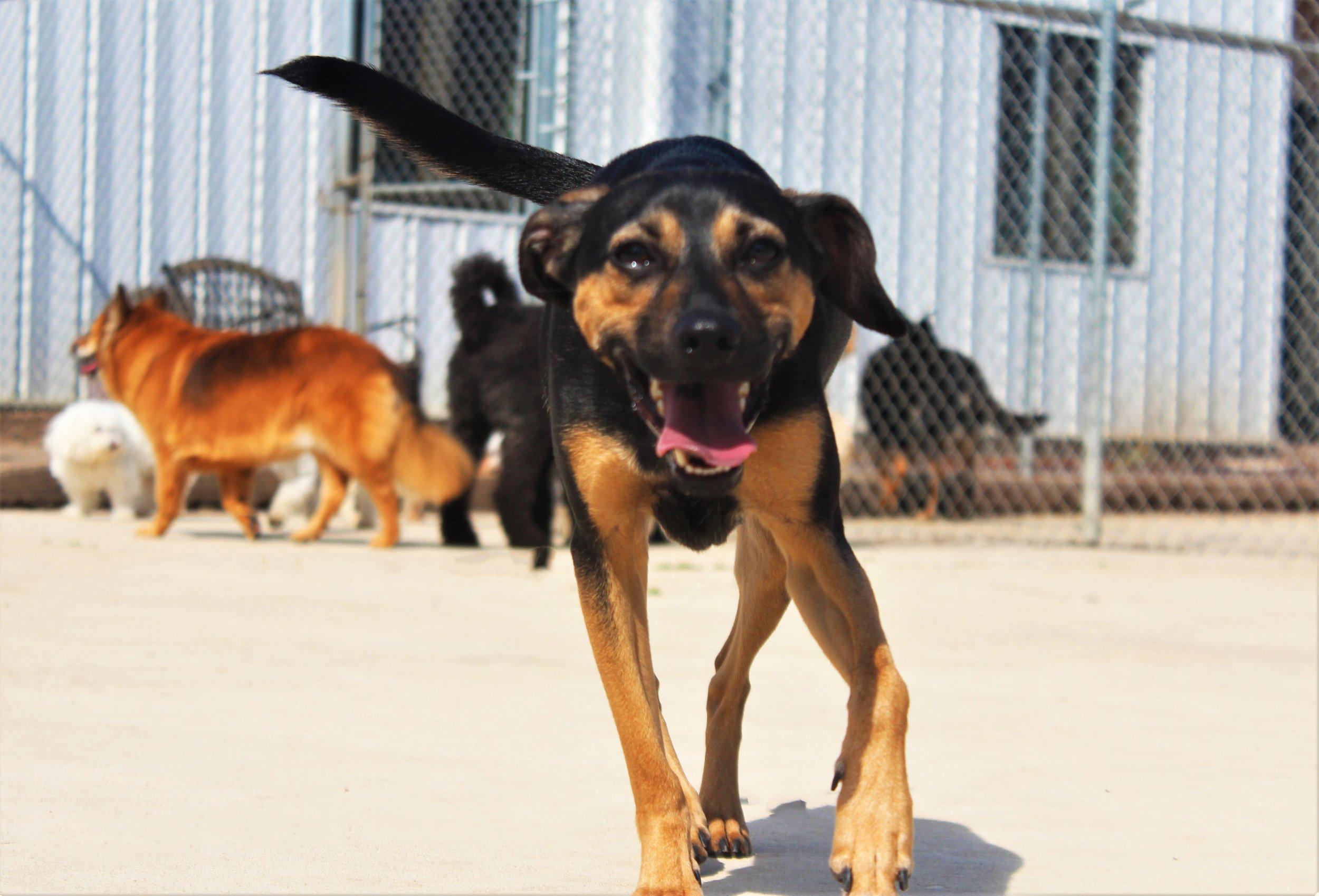 Pet Nation Lodge Daycare Dog Elwood 3