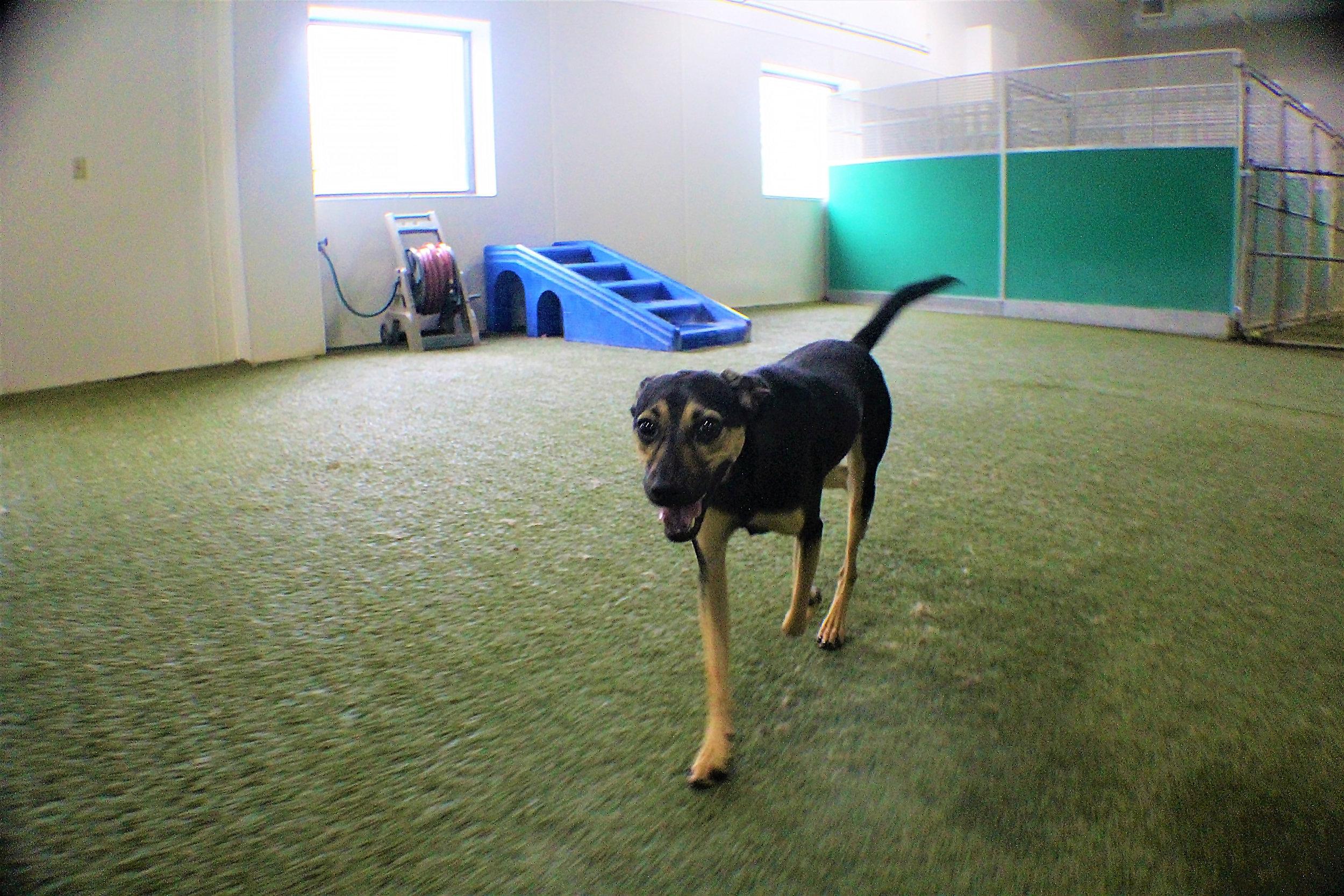 Pet Nation Lodge Daycare Dog Elwood 4