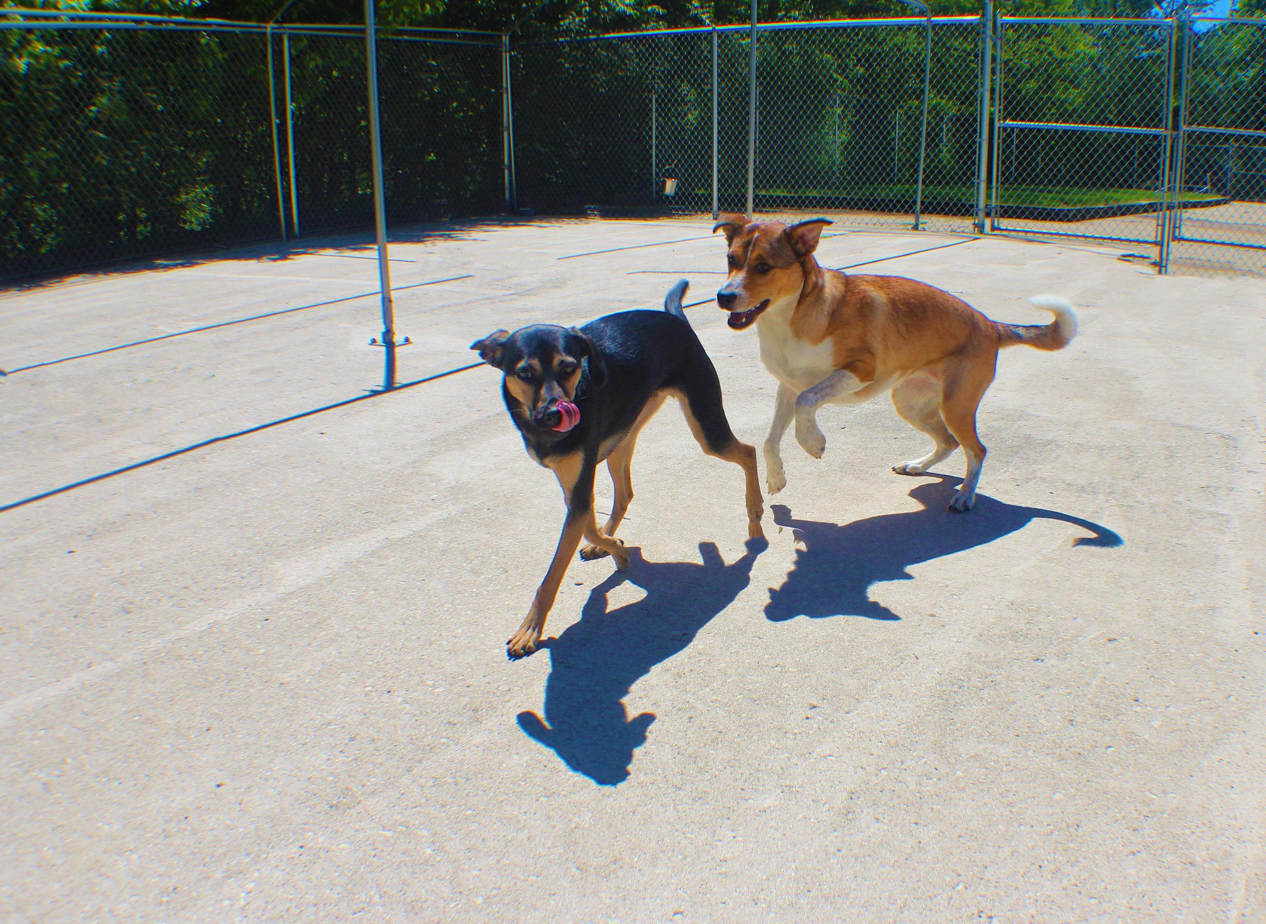 Pet Nation Lodge Boarding Dog Elwood 5