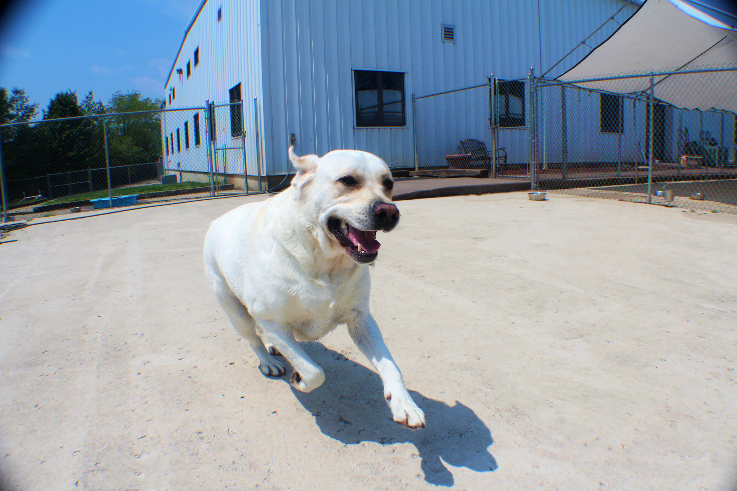 Pet Nation Lodge Boarding Dog Boomer 1