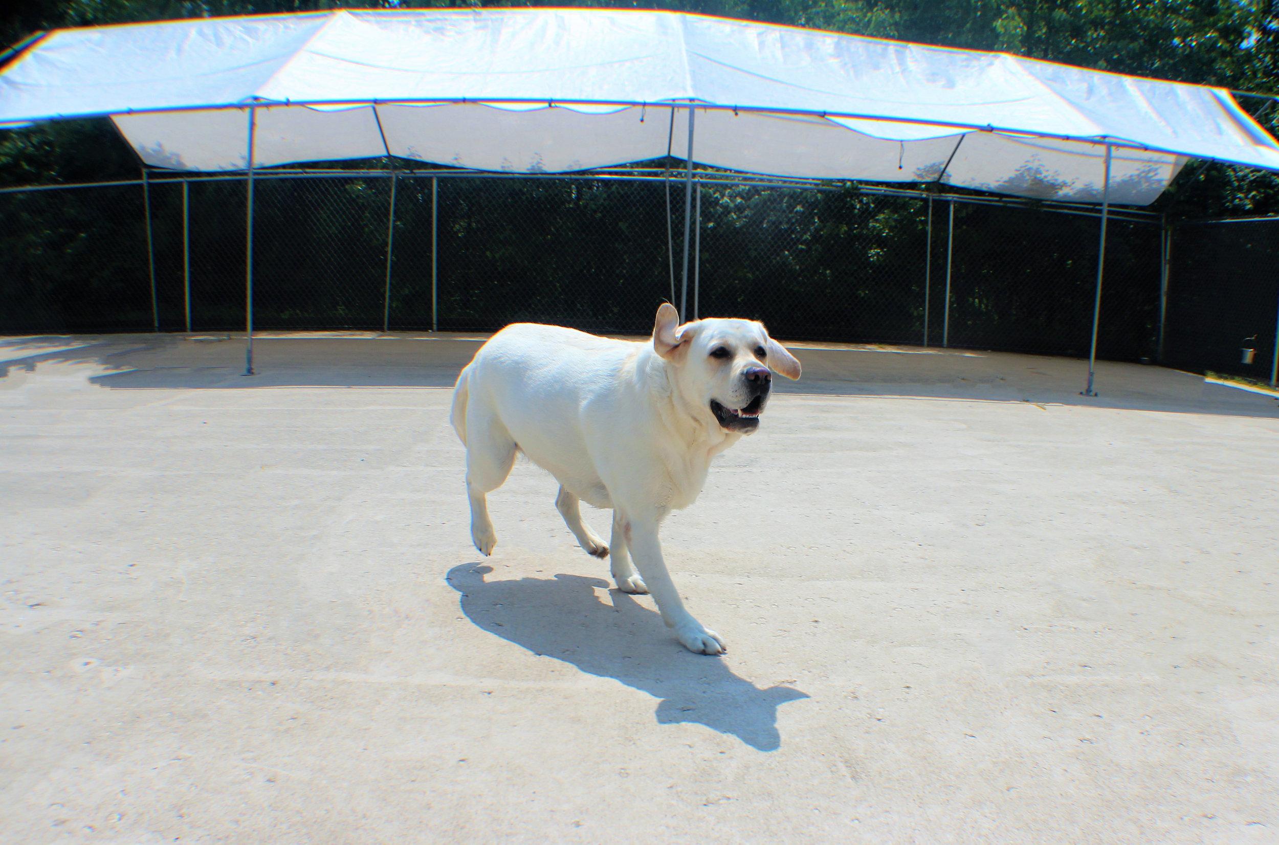 Pet Nation Lodge Daycare Dog Boomer 6