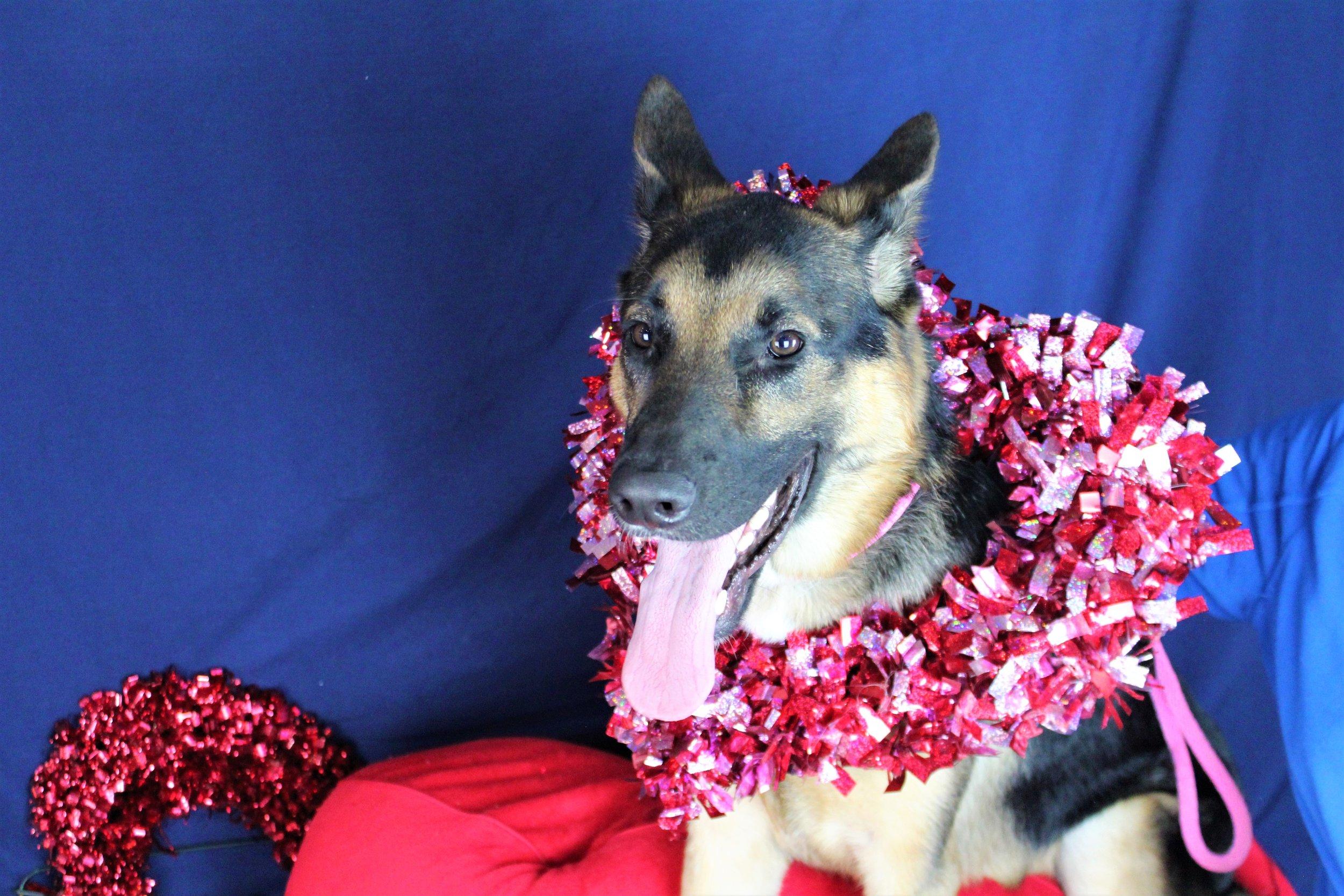 Pet Nation Lodge Daycare Dog Hunter 5
