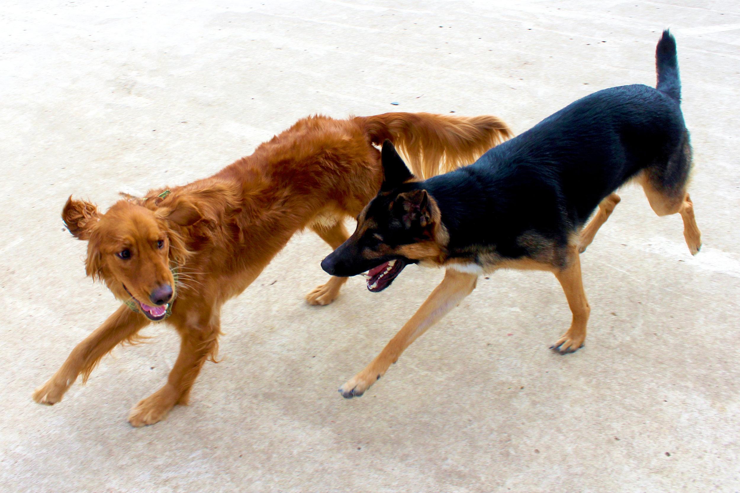 Pet Nation Lodge Boarding Dog Kobe 7