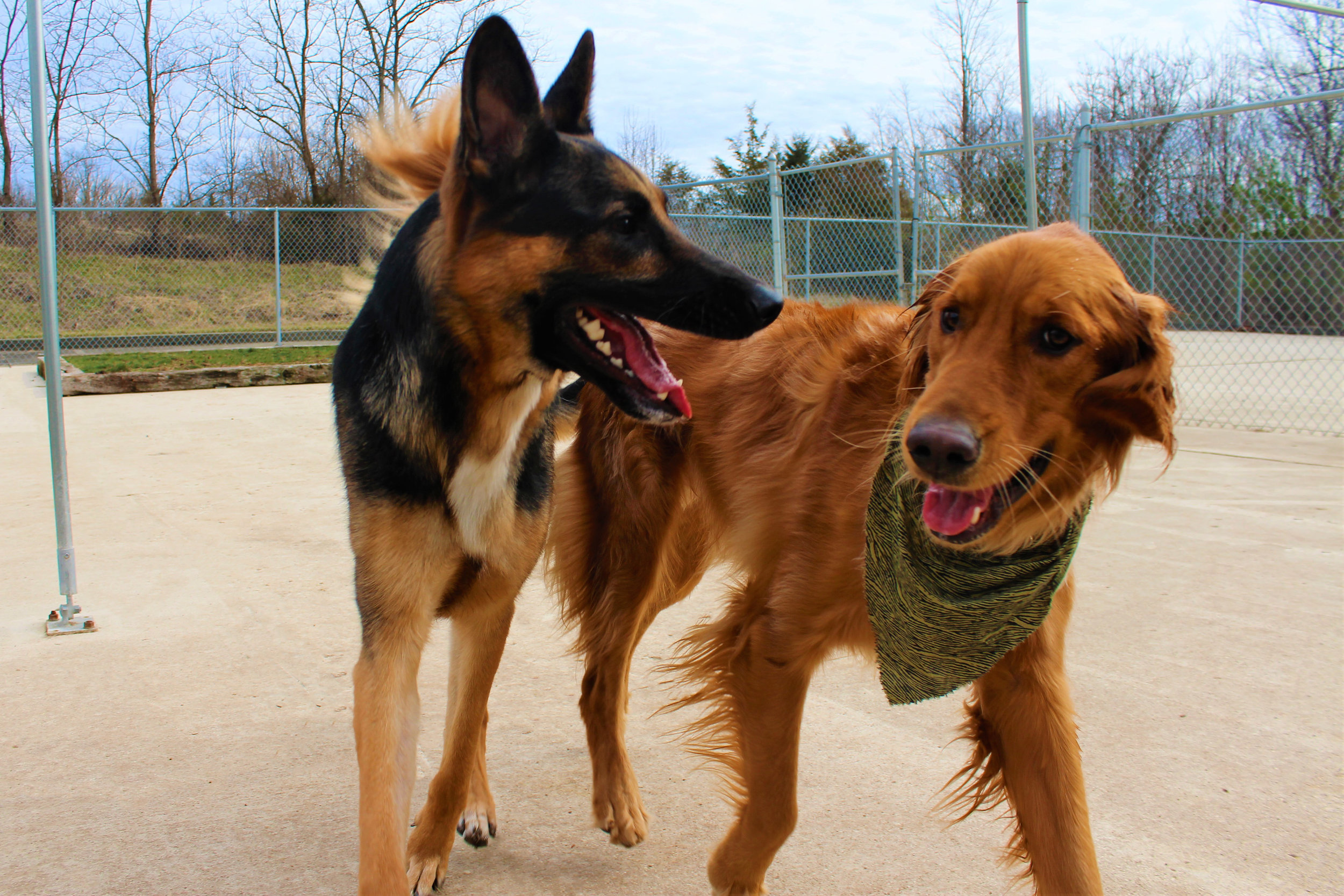 Pet Nation Lodge Boarding Dog Kobe 3