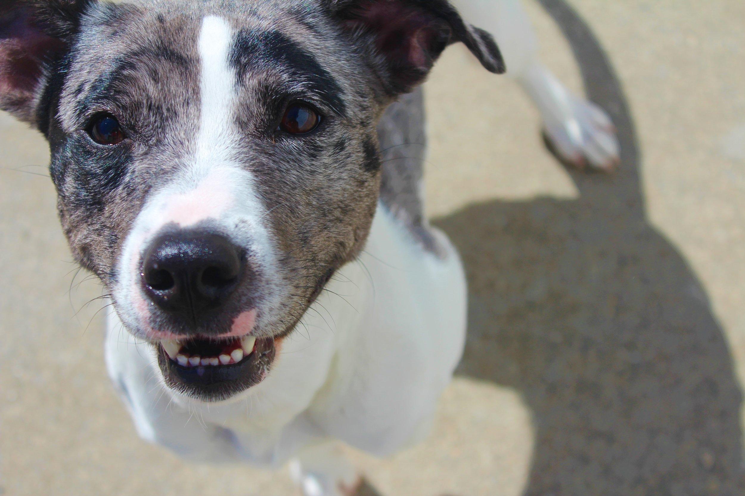 Pet Nation Lodge Daycare Dog Greta 5