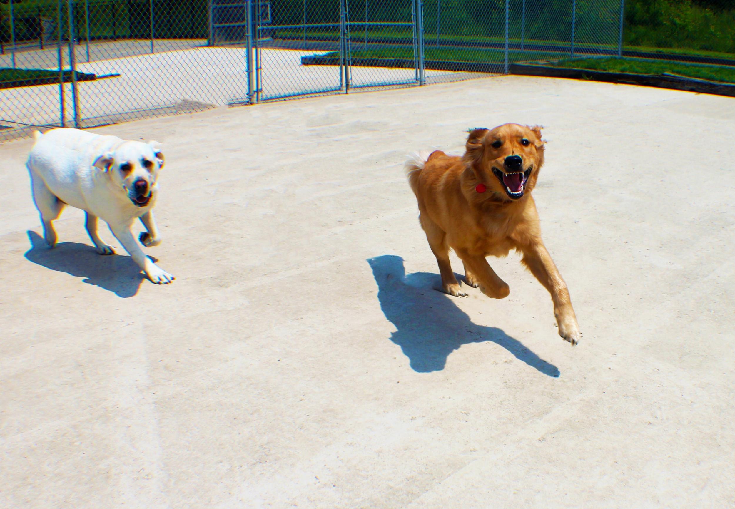 Pet Nation Lodge Daycare Dog Gorden 1