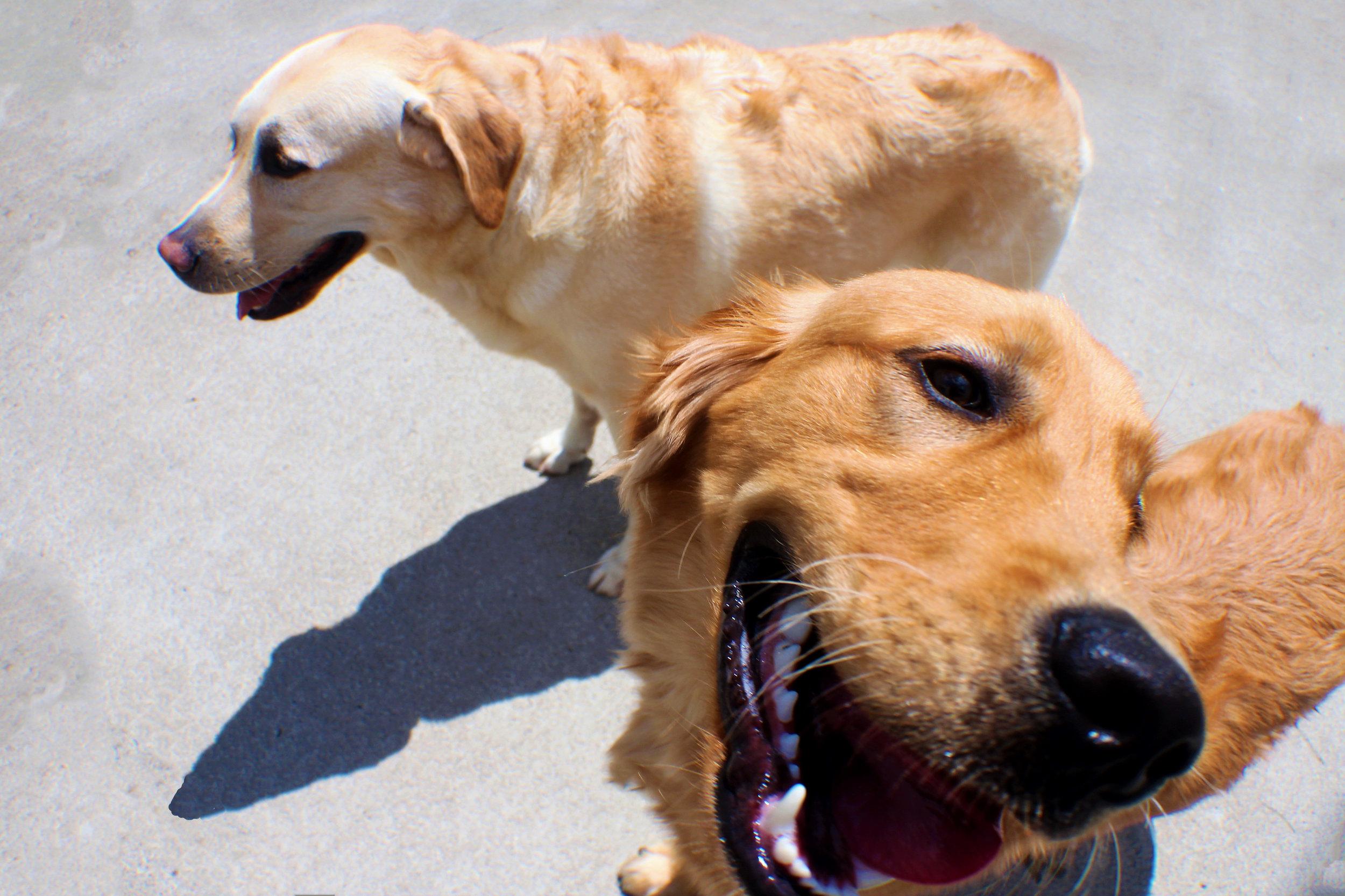 Pet Nation Lodge Boarding Dog Gorden 3