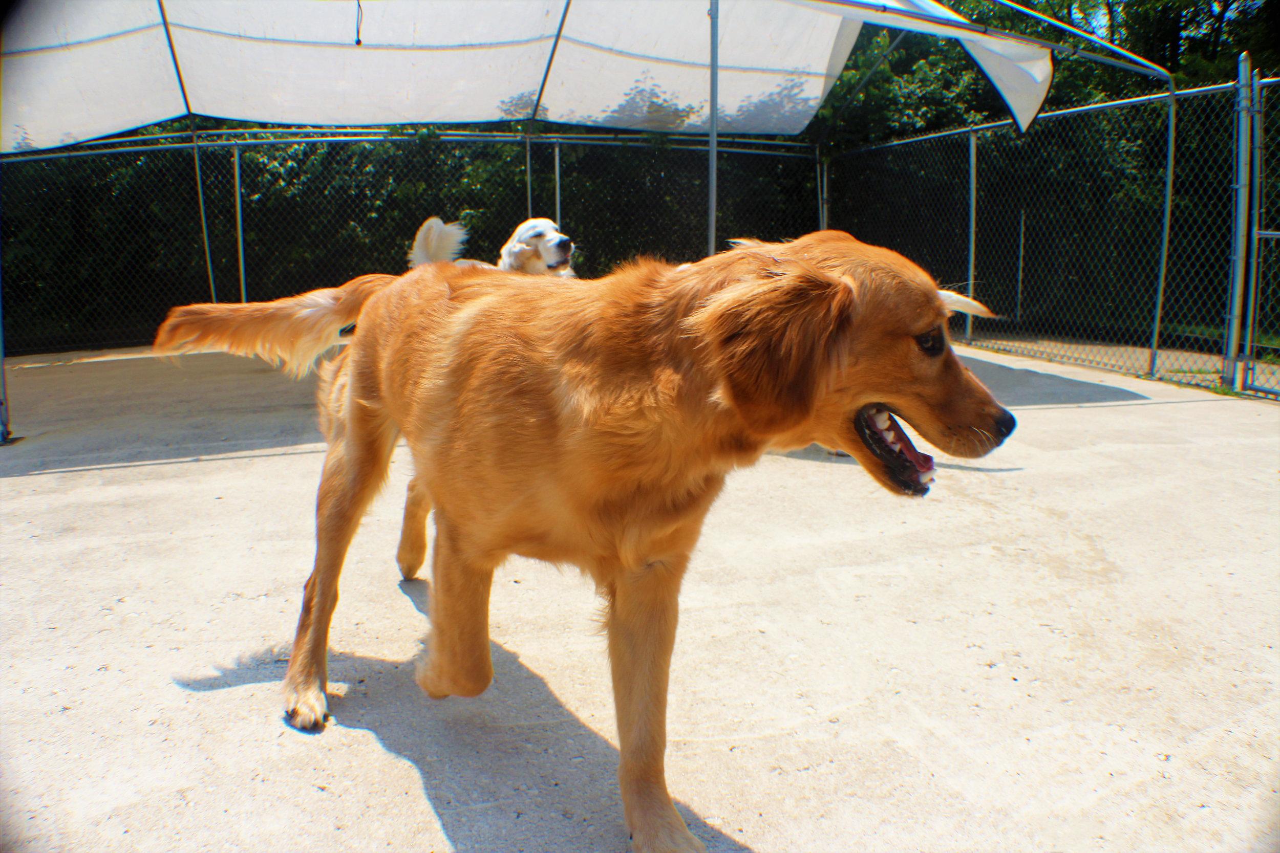 Pet Nation Lodge Boarding Dog Gorden 8