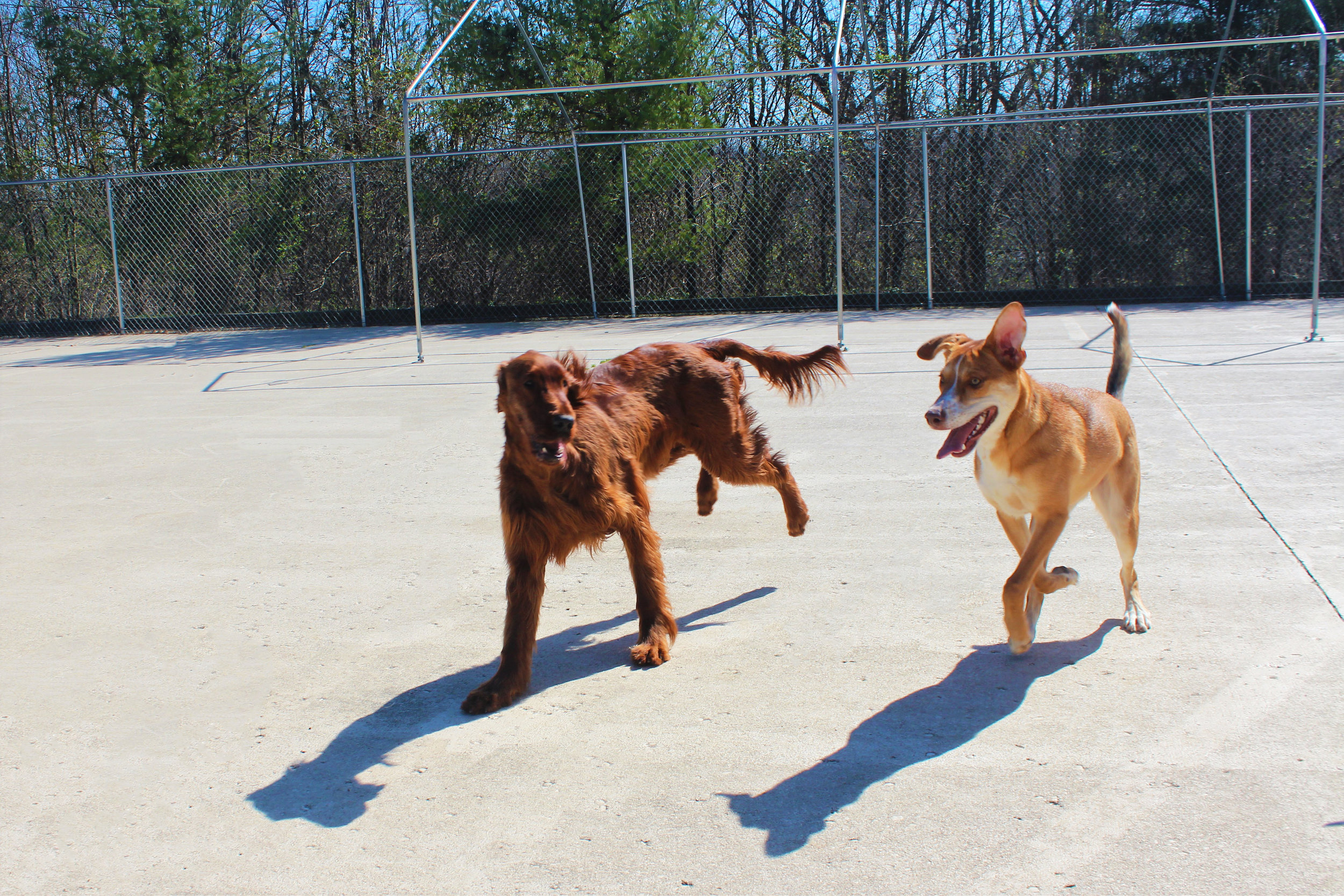 Maddie and her friend Bailey are two of the fastest dogs we have. The speed at which they operate is hard to explain. I would be hard pressed to find a human fast enough to catch them.