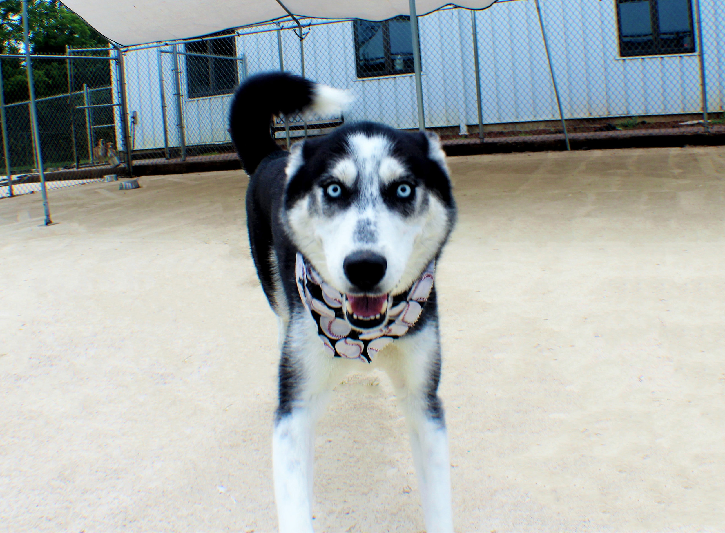Pet Nation Lodge Daycare Dog Killian 8