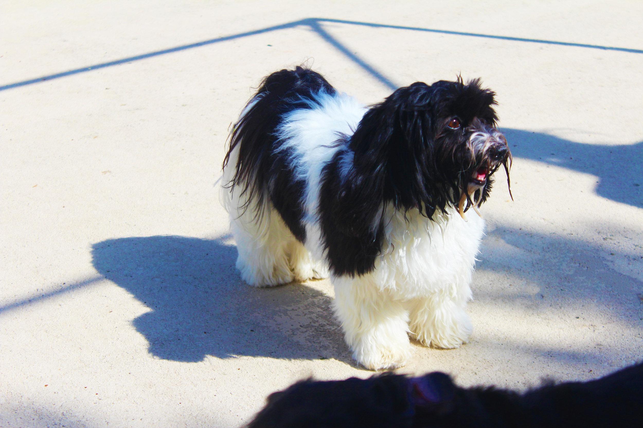 Pet Nation Lodge Boarding Dog Abby 1