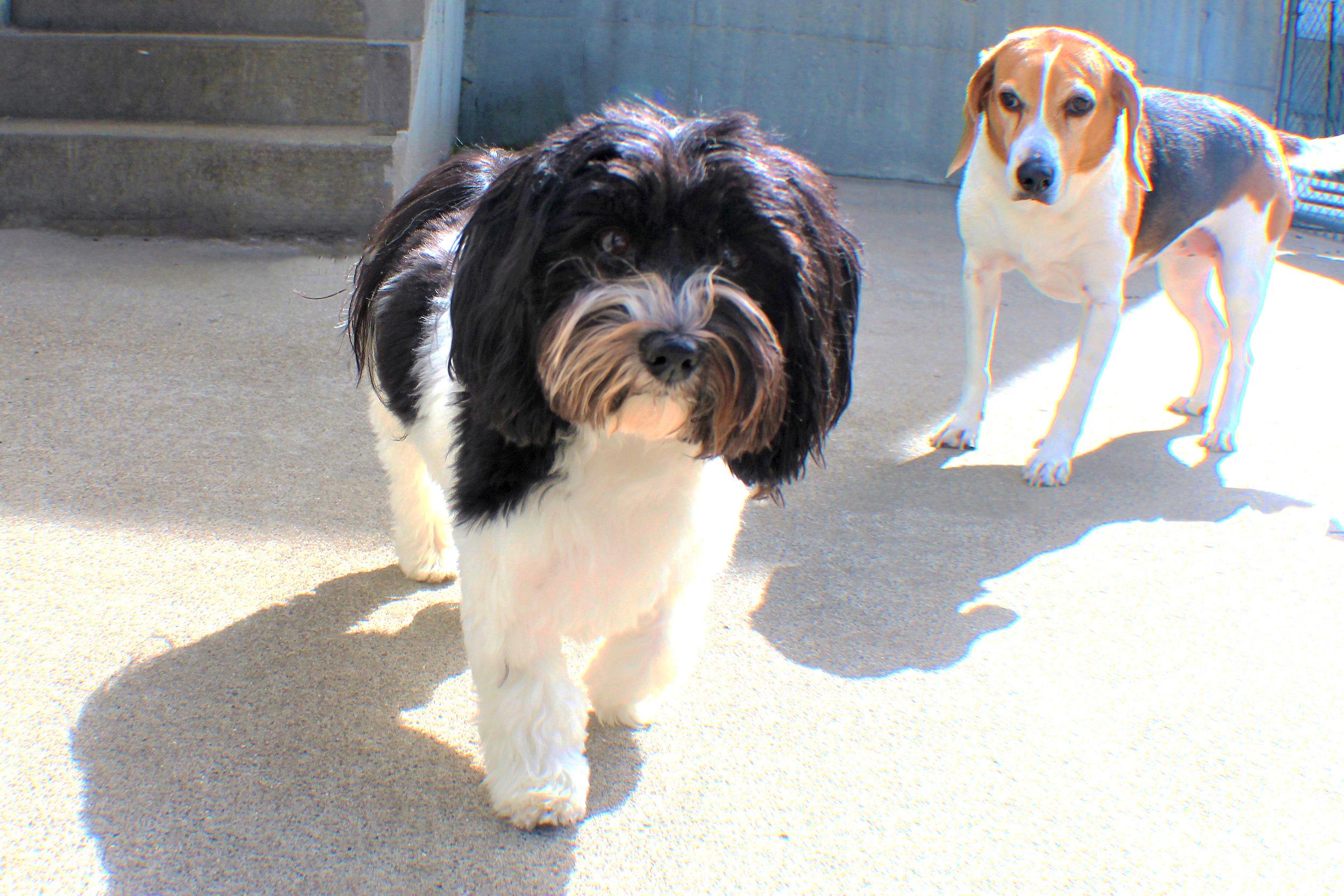 Pet Nation Lodge Daycare Dog Abby 6
