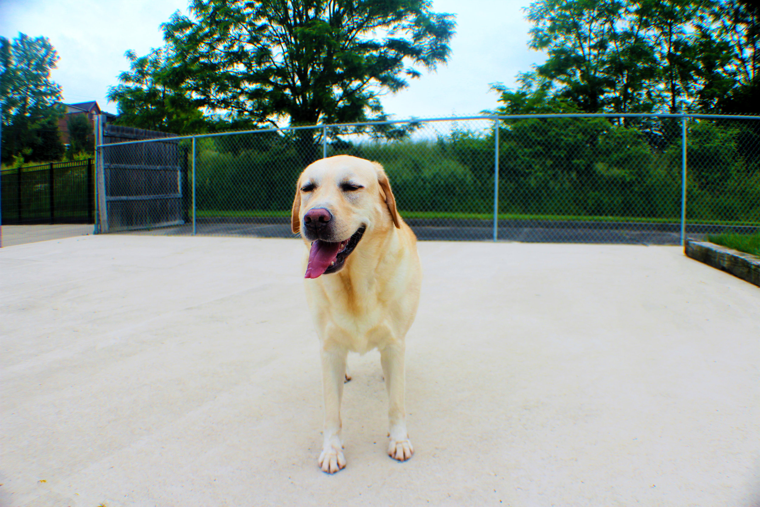 Pet Nation Lodge Daycare Dog Chester 5
