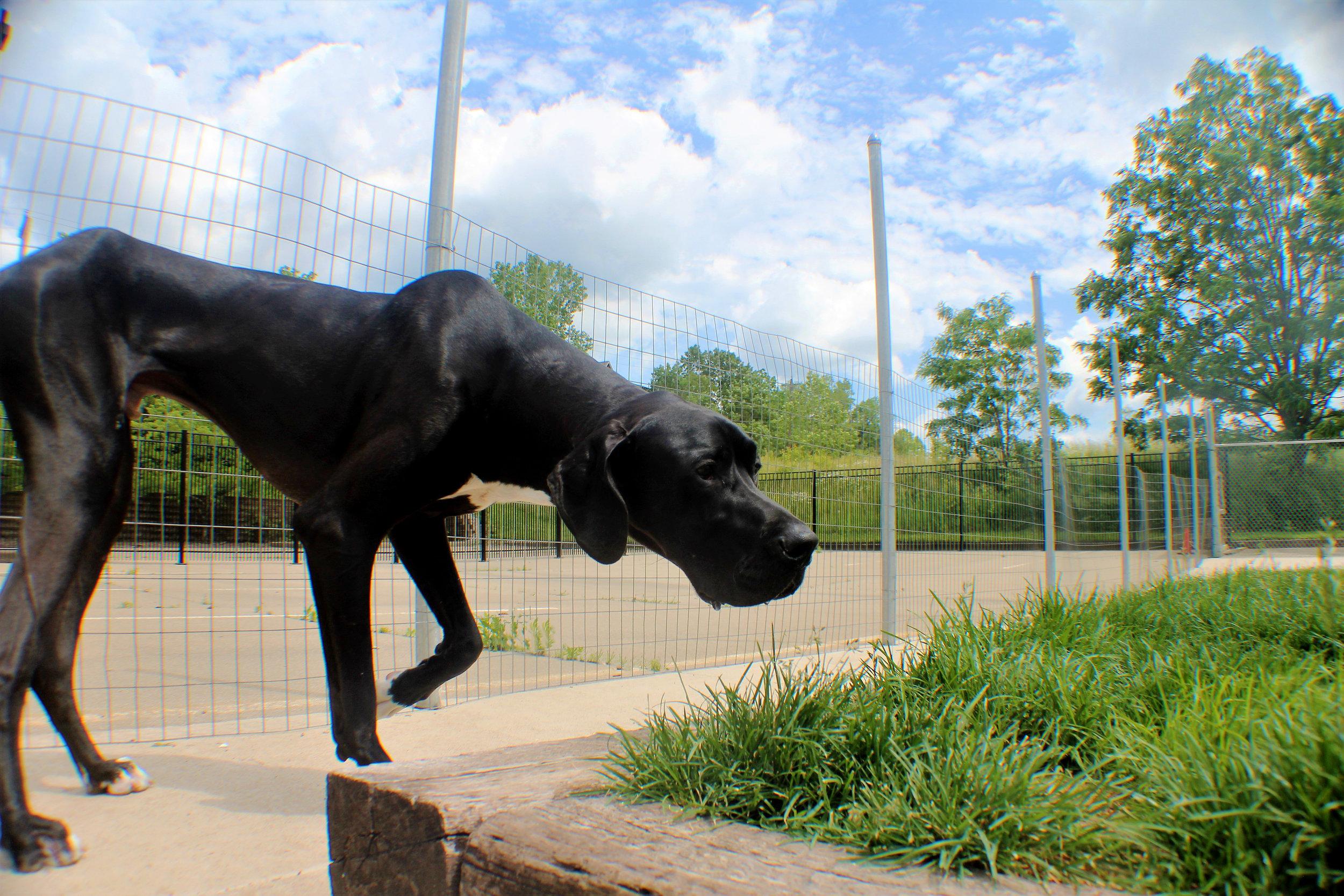 Pet Nation Lodge Boarding Dog Lou 8