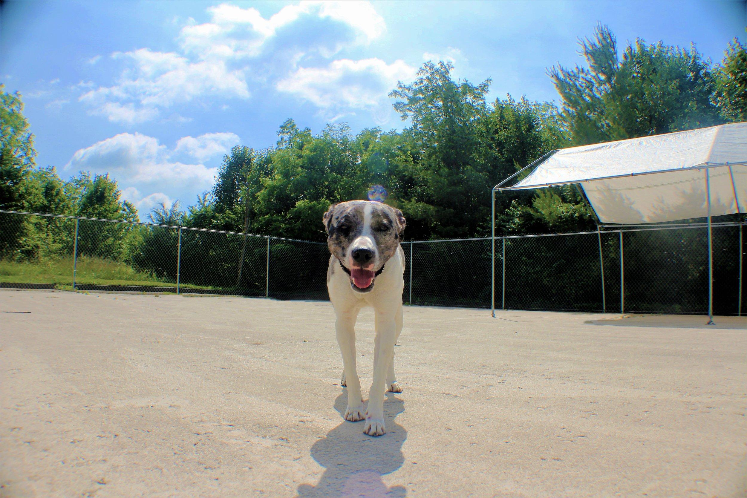 Pet Nation Lodge Boarding Dog Greta 7