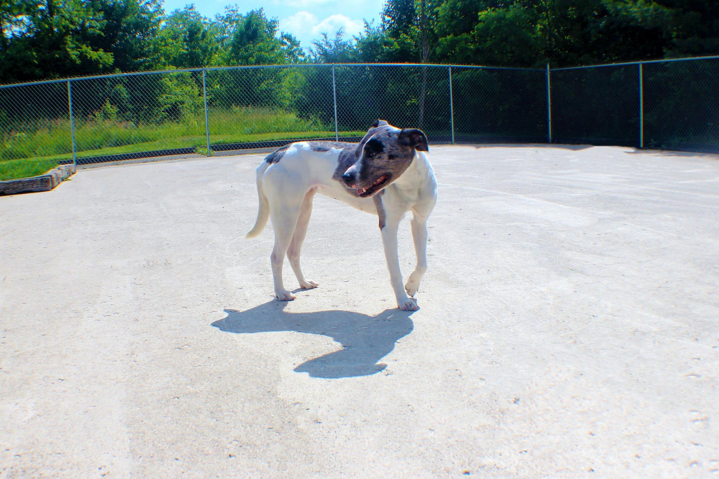 Pet Nation Lodge Daycare Dog Greta 8