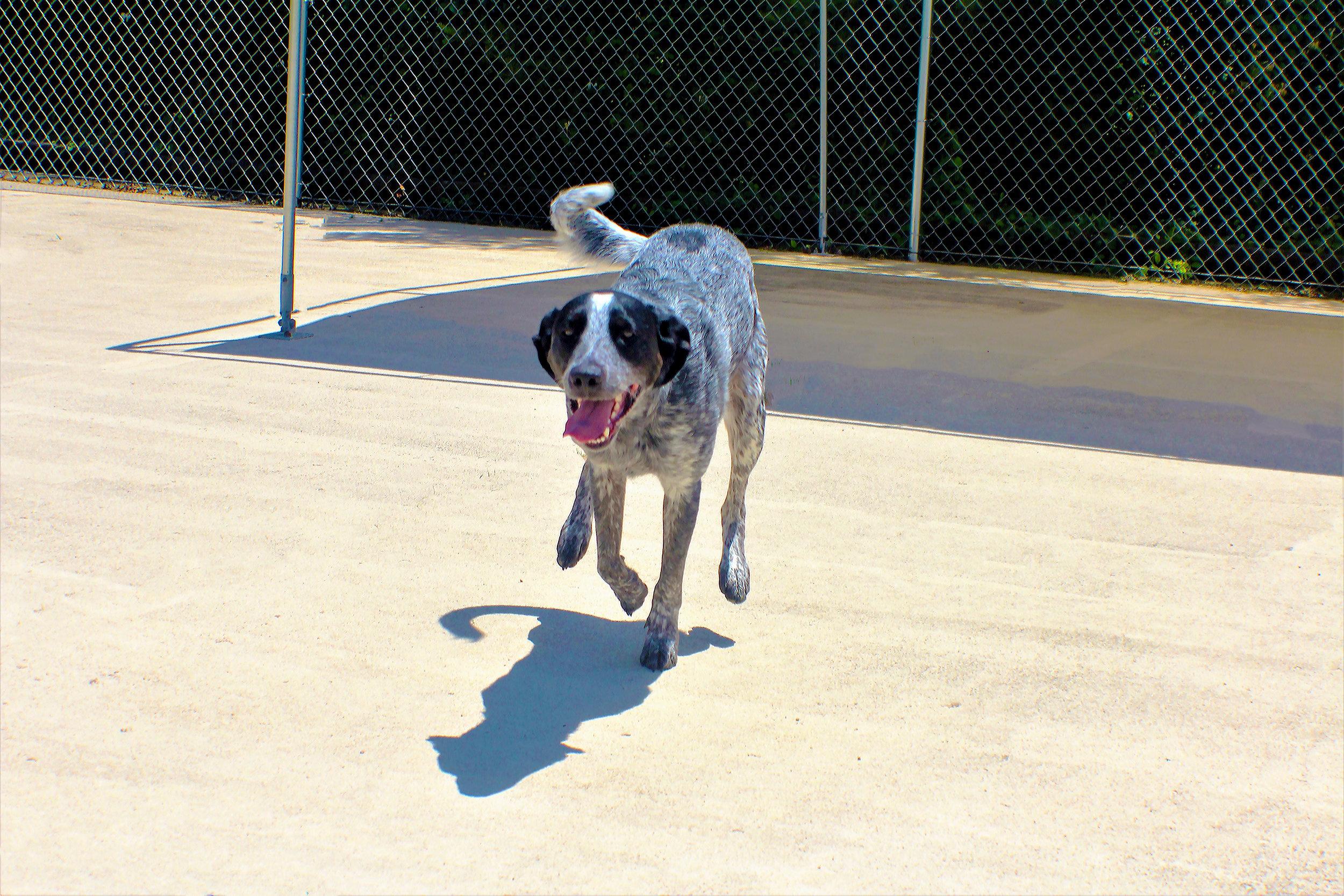 Pet Nation Lodge Daycare Dog Sam 9