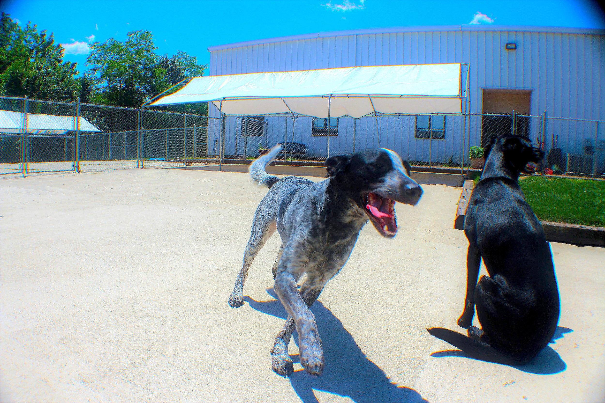 Pet Nation Lodge Boarding Dog Sam 10
