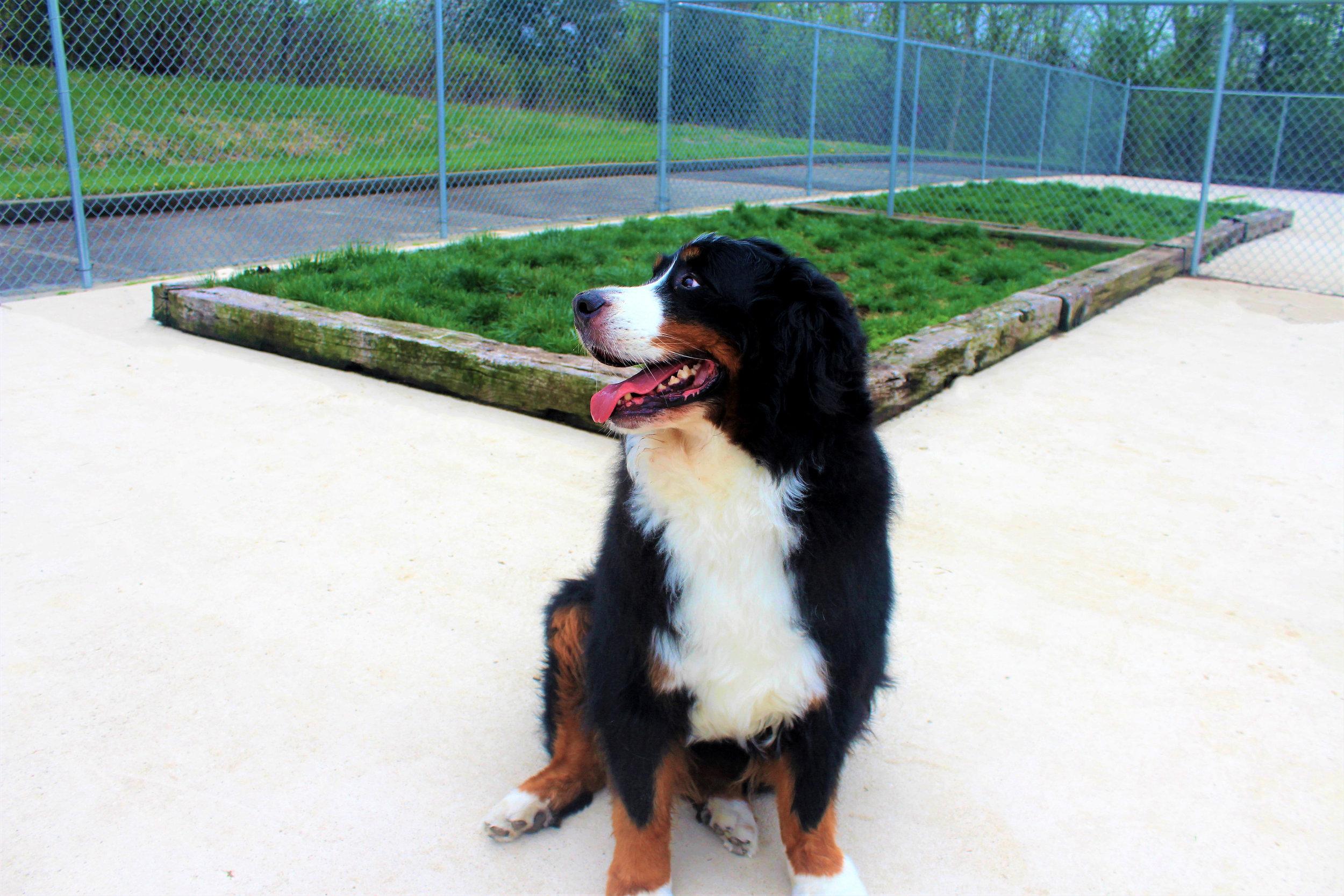 Pet Nation Lodge Daycare Dog Fiona 1